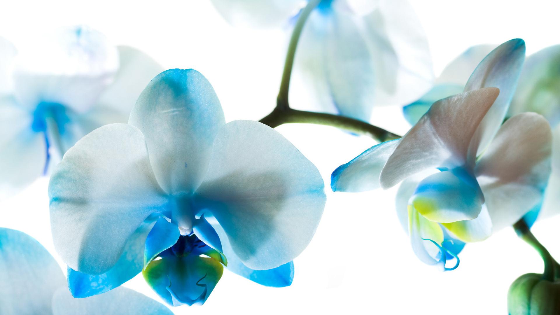 Картинки цветы орхидеи, открытки кошками