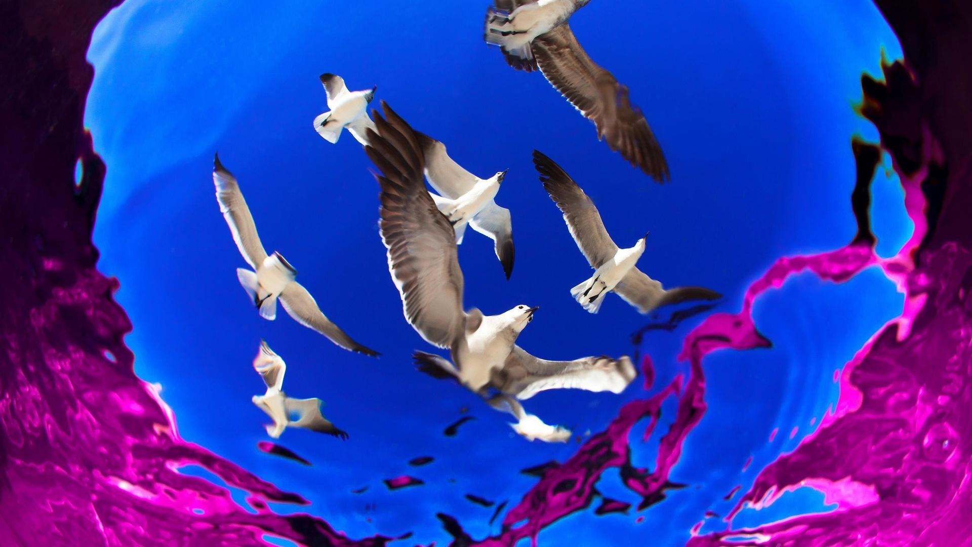 морские чайки, снимок из воды, фото, alejandro prieto