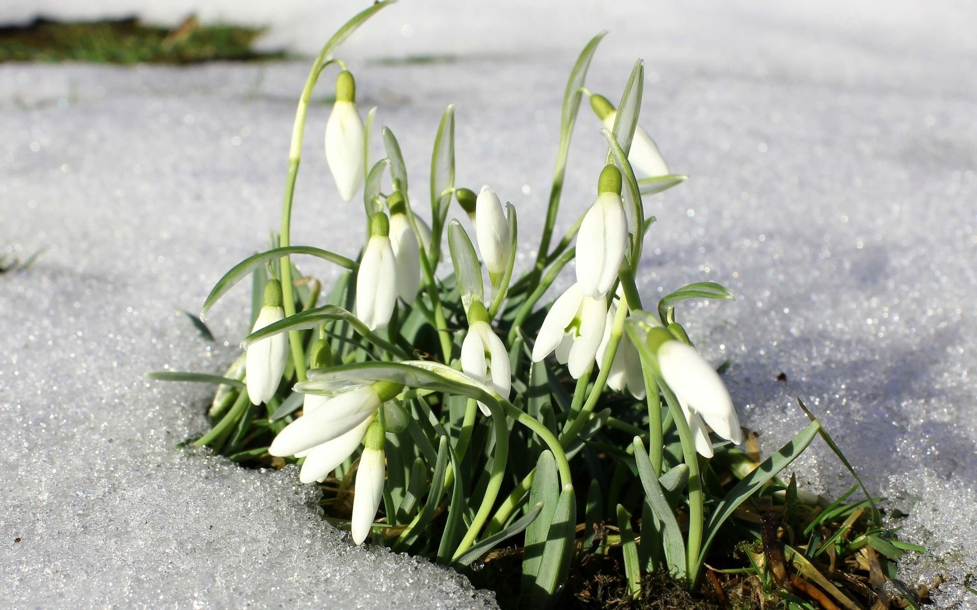 весна картинки март подснежники данный момент это