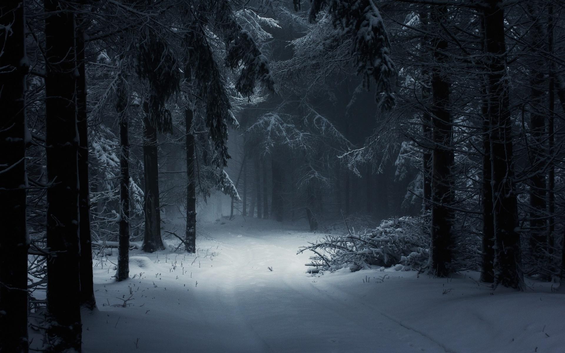 фото в лесу ночью зимой северного