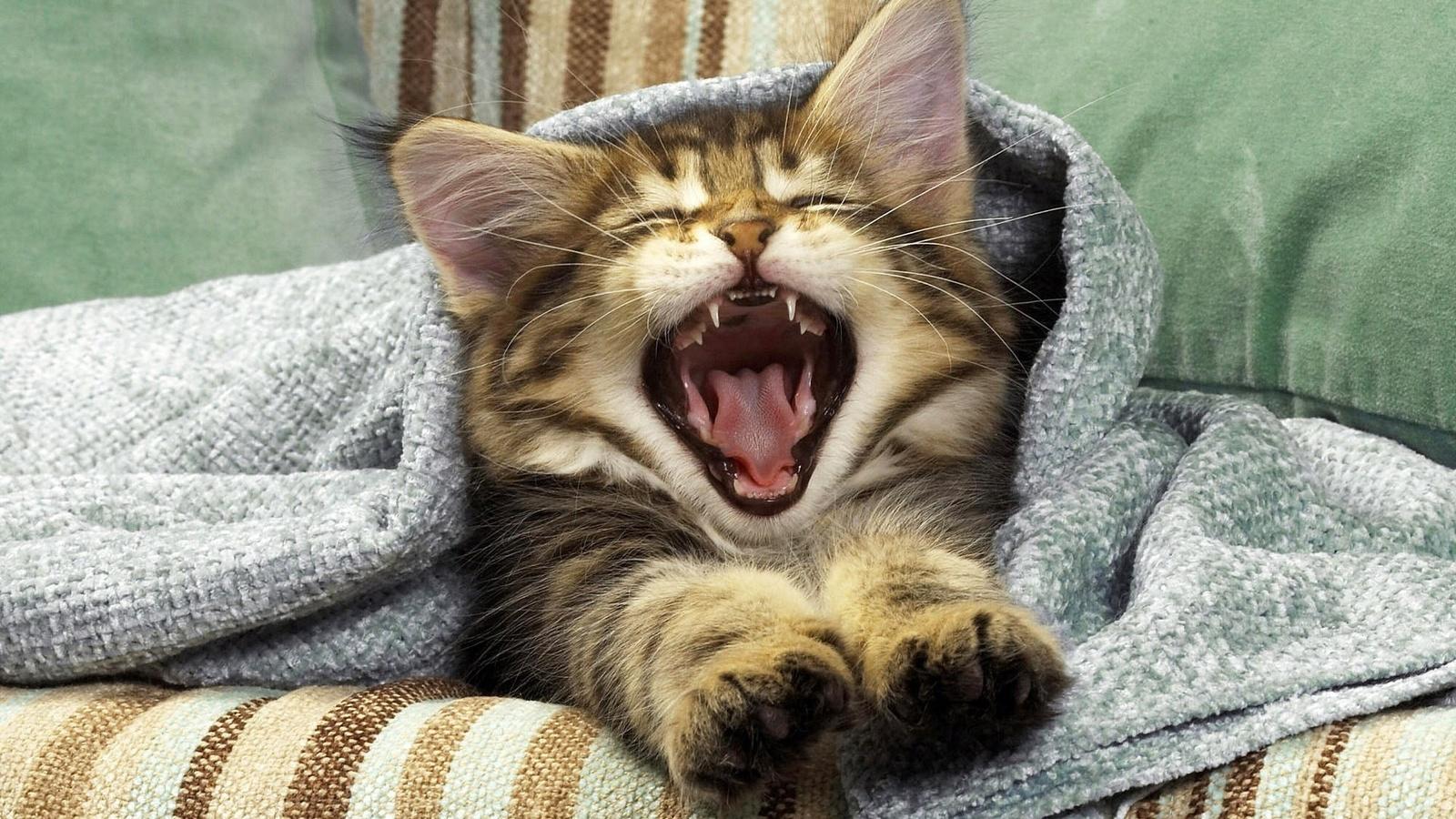 Доброе утро картинки кошки прикольные картинки, мегаполиса