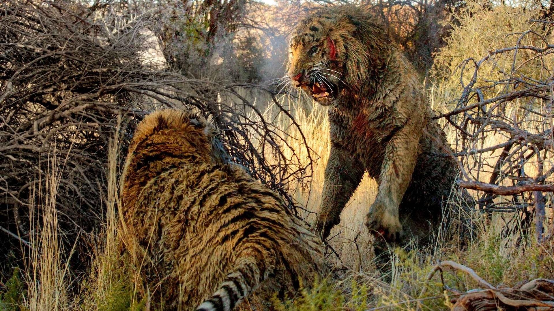 Самый опасный хищник в мире видео как