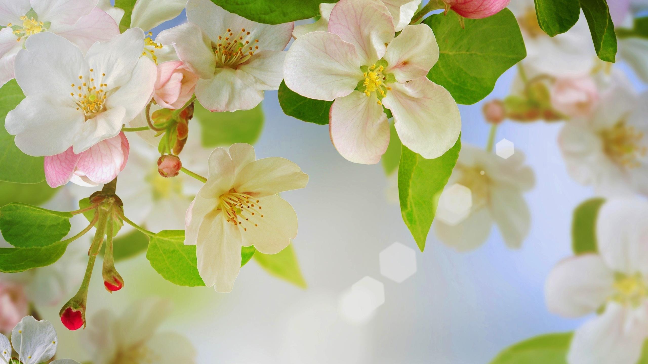 Простые, открытки с яблоневым цветом