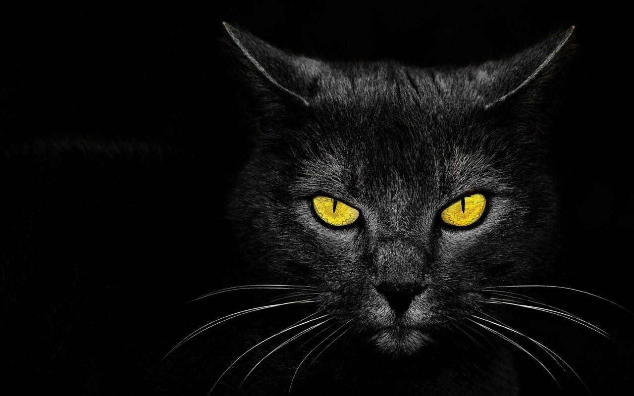 Картинки злые кошки на рабочий стол, покрова пресвятой