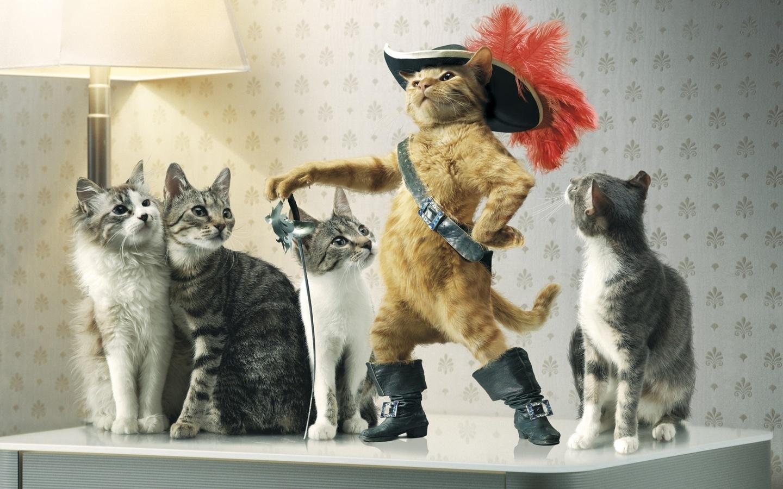 Коты приколы на картинках