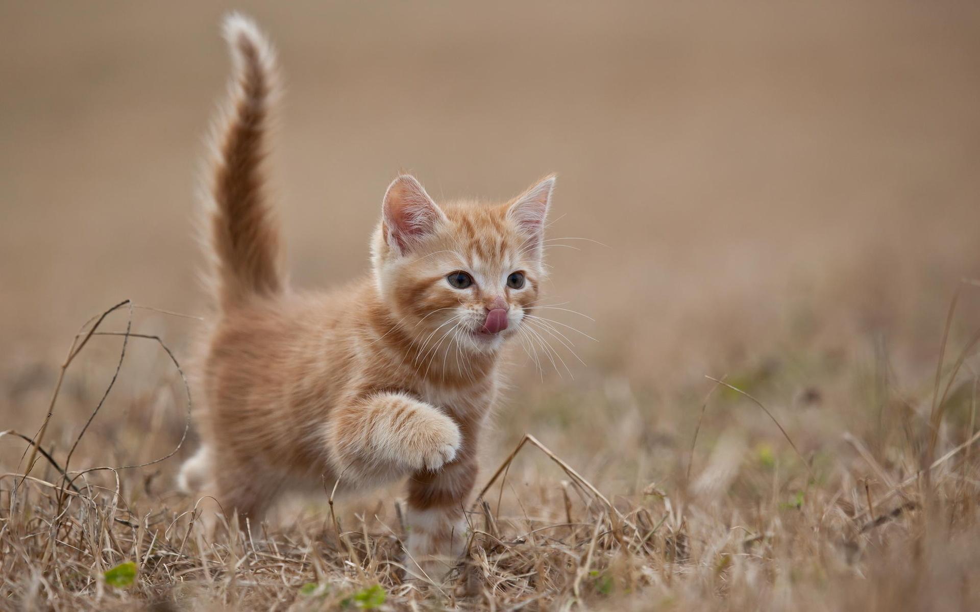 Картинки, рыжий котенок картинки фото