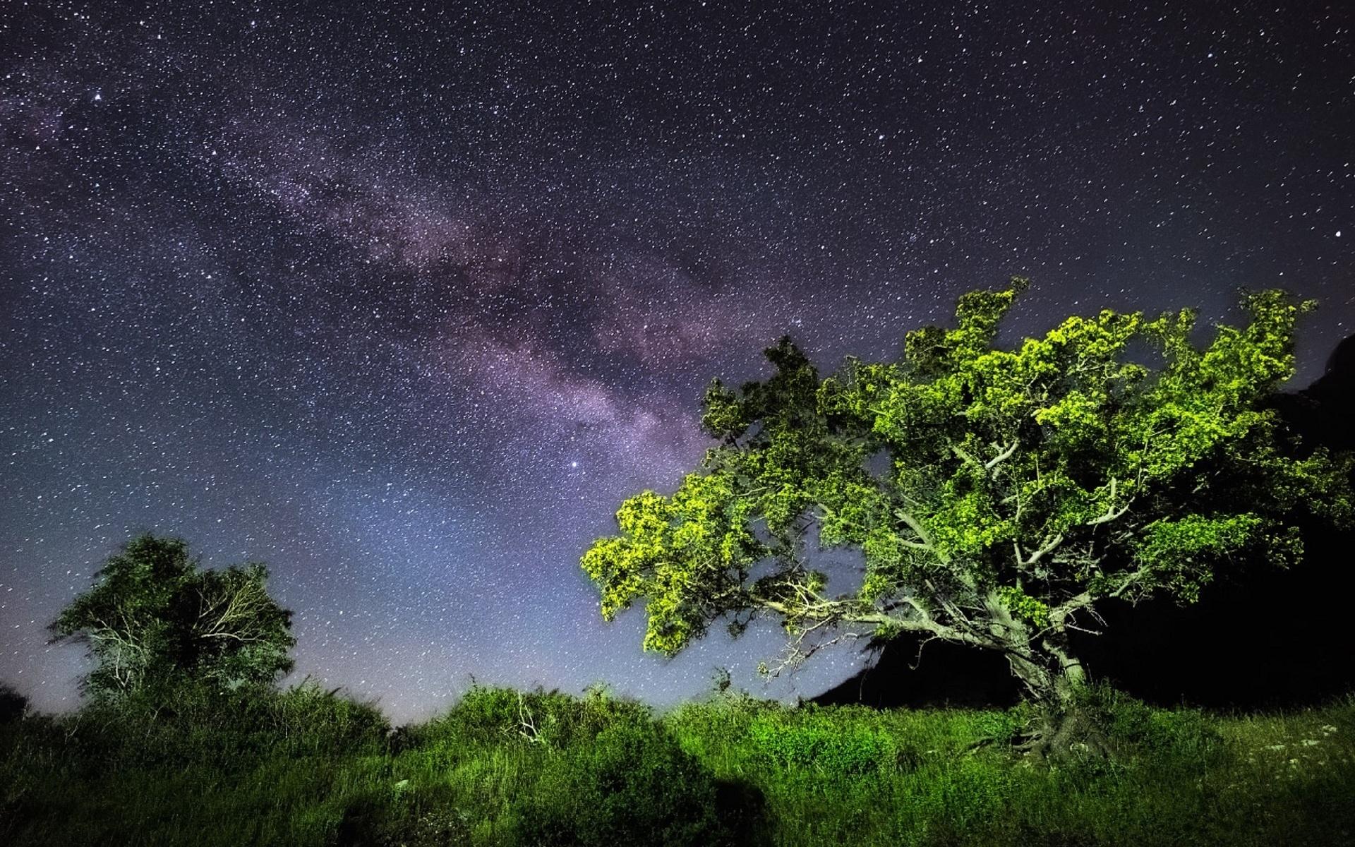 как фотографировать звездное небо и лес для фотографий позволяет