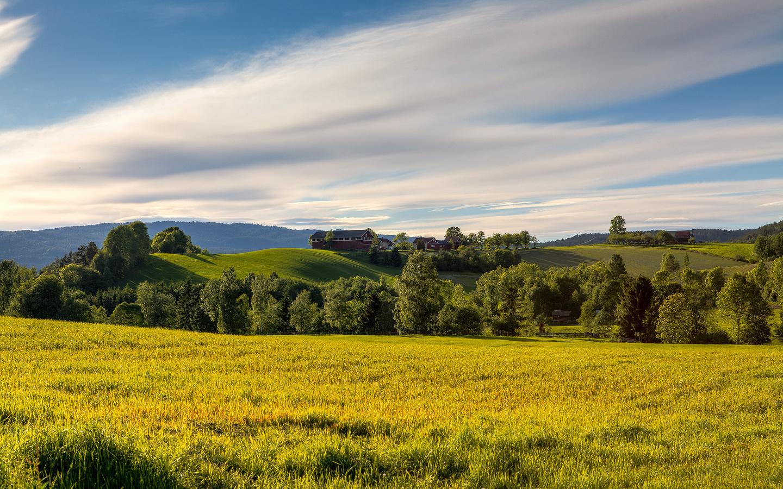 поле, поляна, пространства, лето, трава, деревья, норвегия