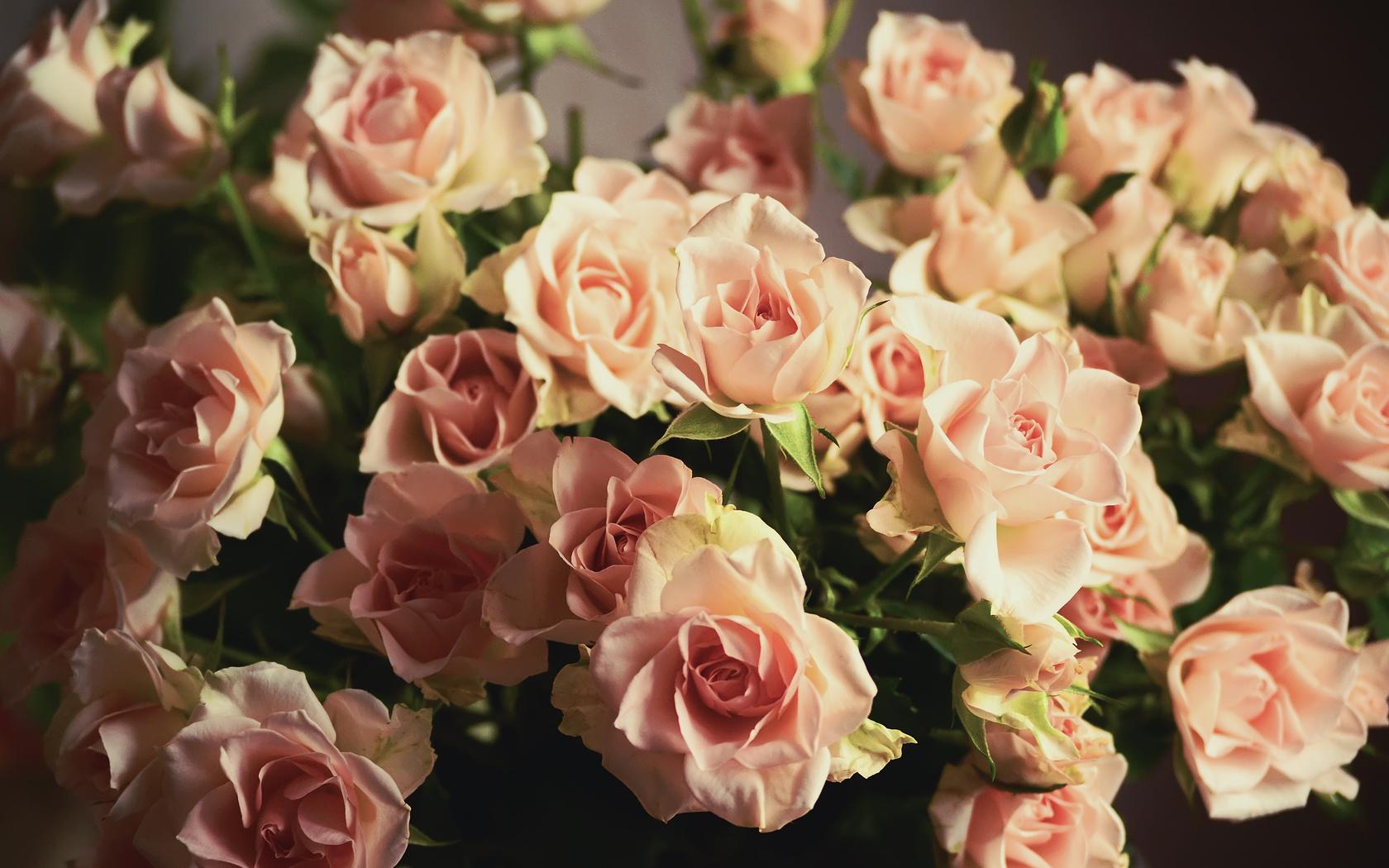 букет, розы, розы, лепестки, цветы