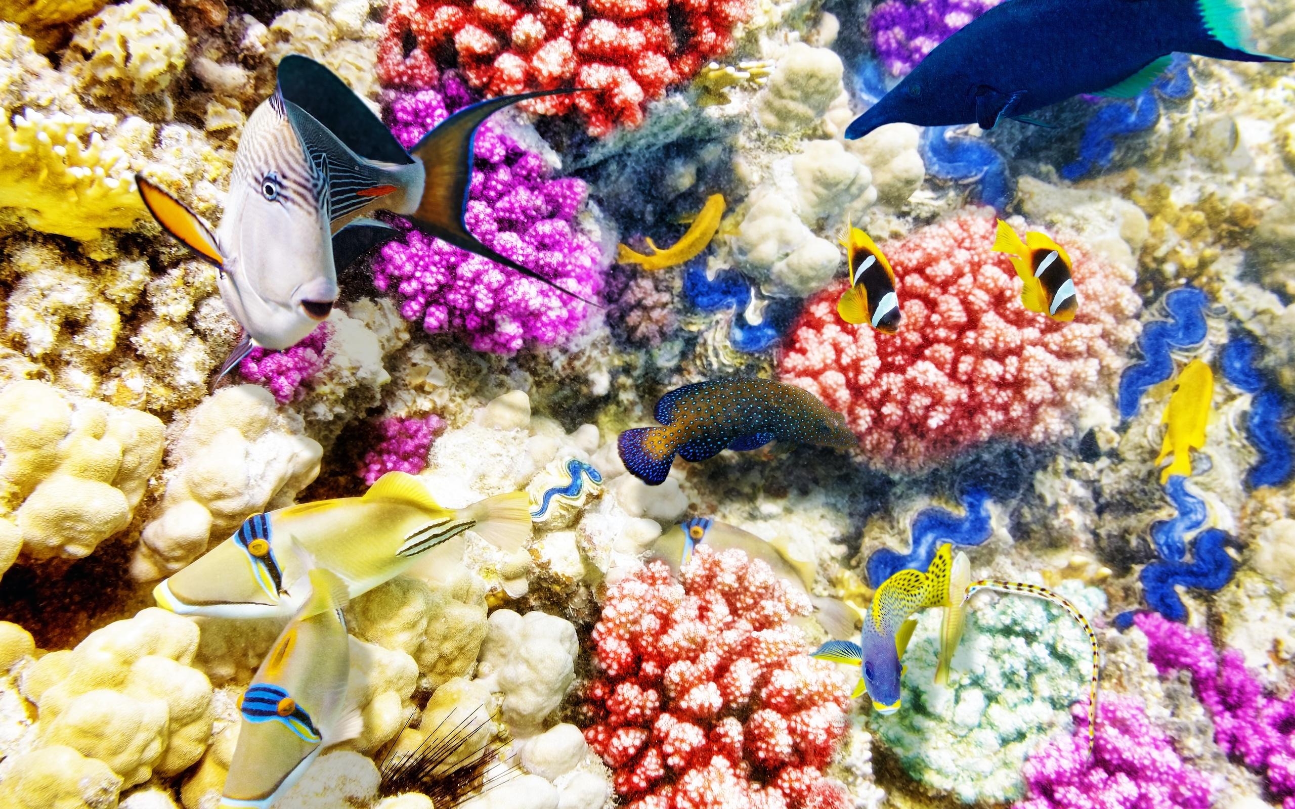 Красивые картинки подводный мир