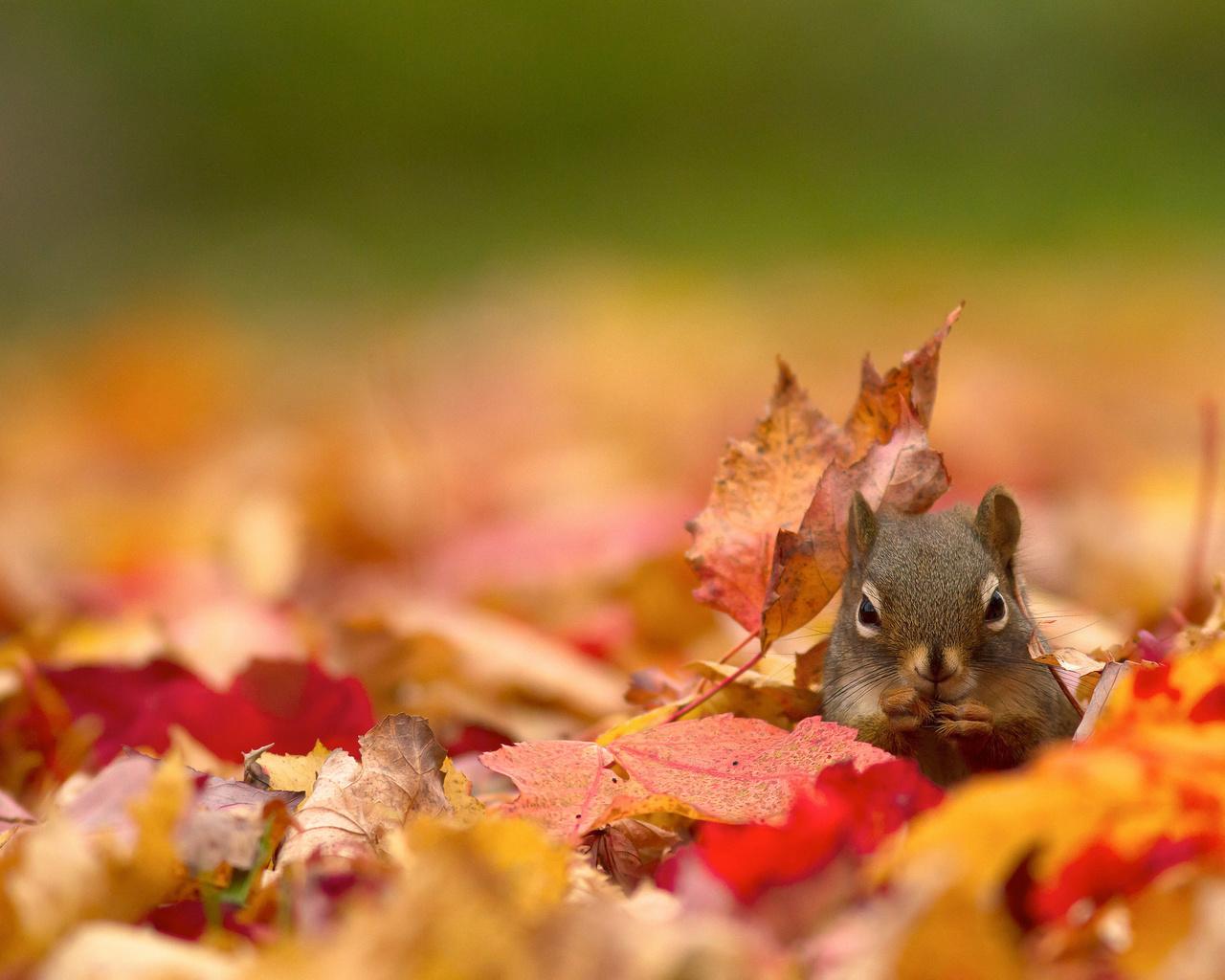 клевые картинки осень парят