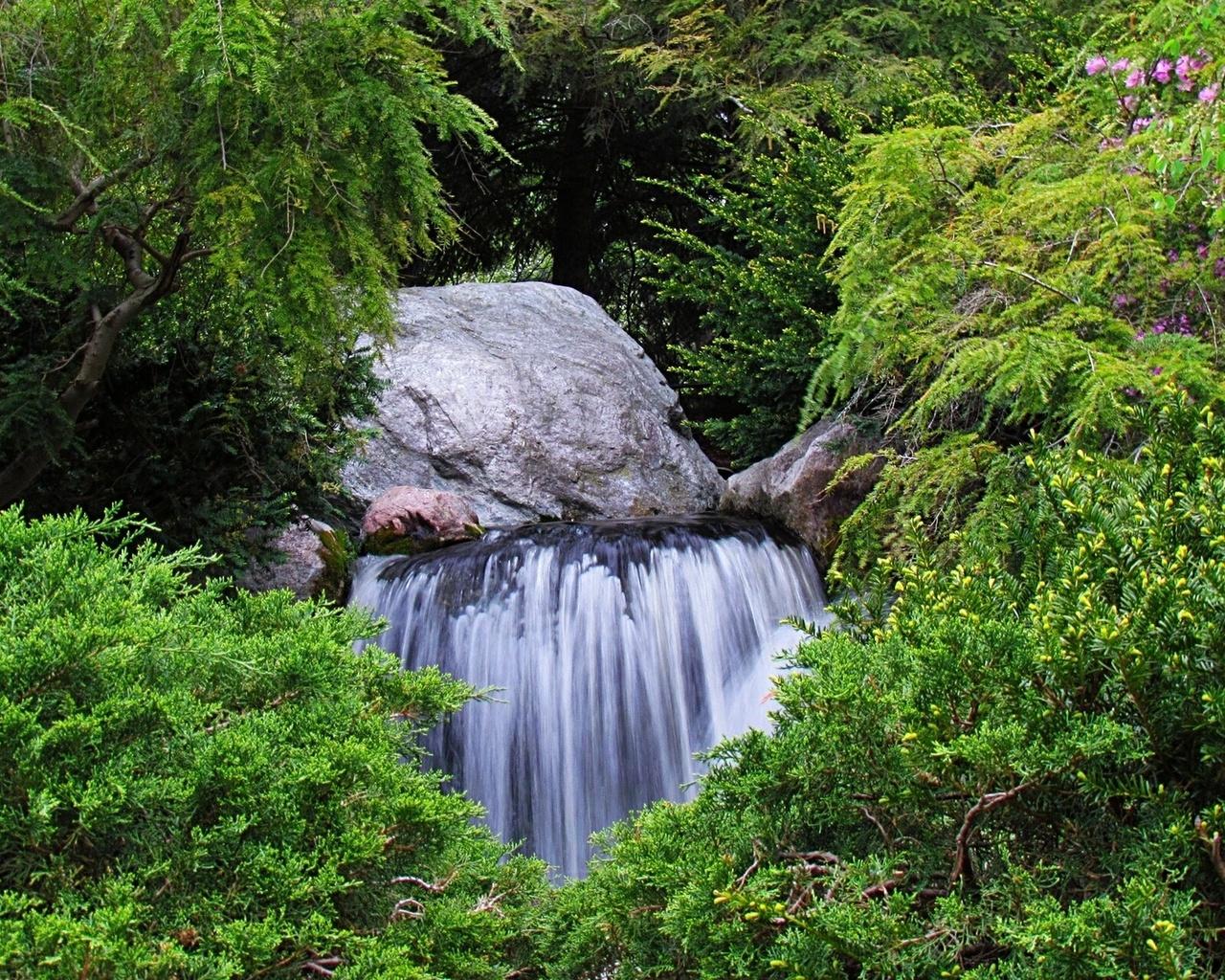 природа раскраска и фото деревья водопады внимание