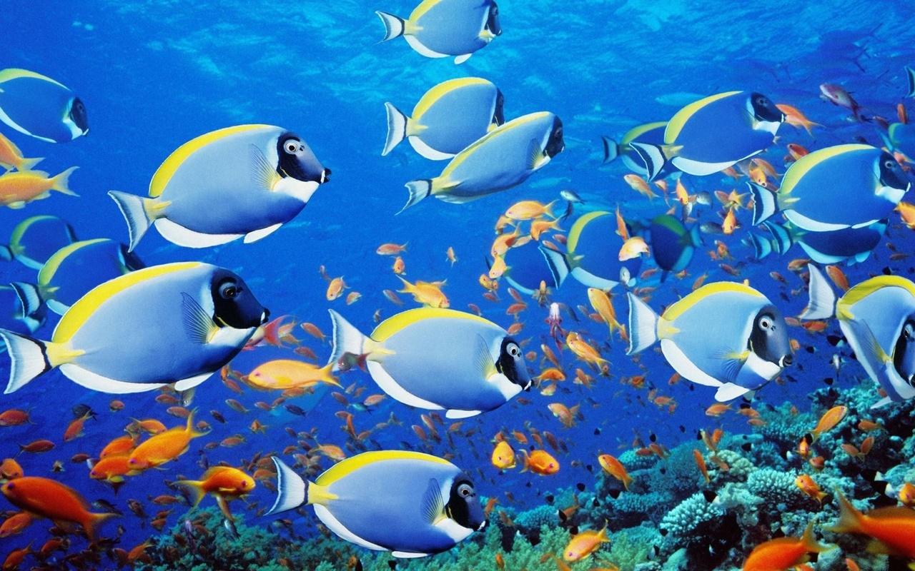 картинки на телефон с плавающими рыбками новые лоты