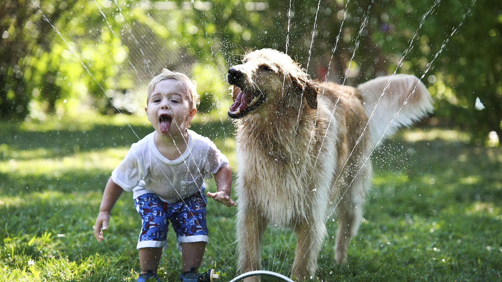 Смешные картинки радость