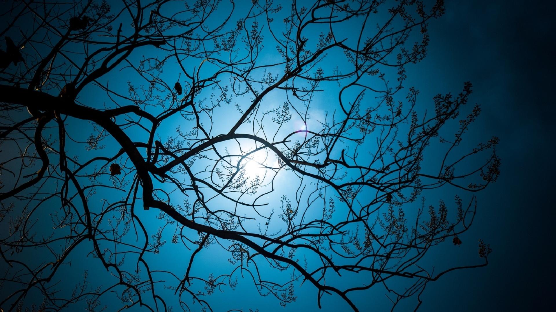 Картинки луны и ветви деревьев