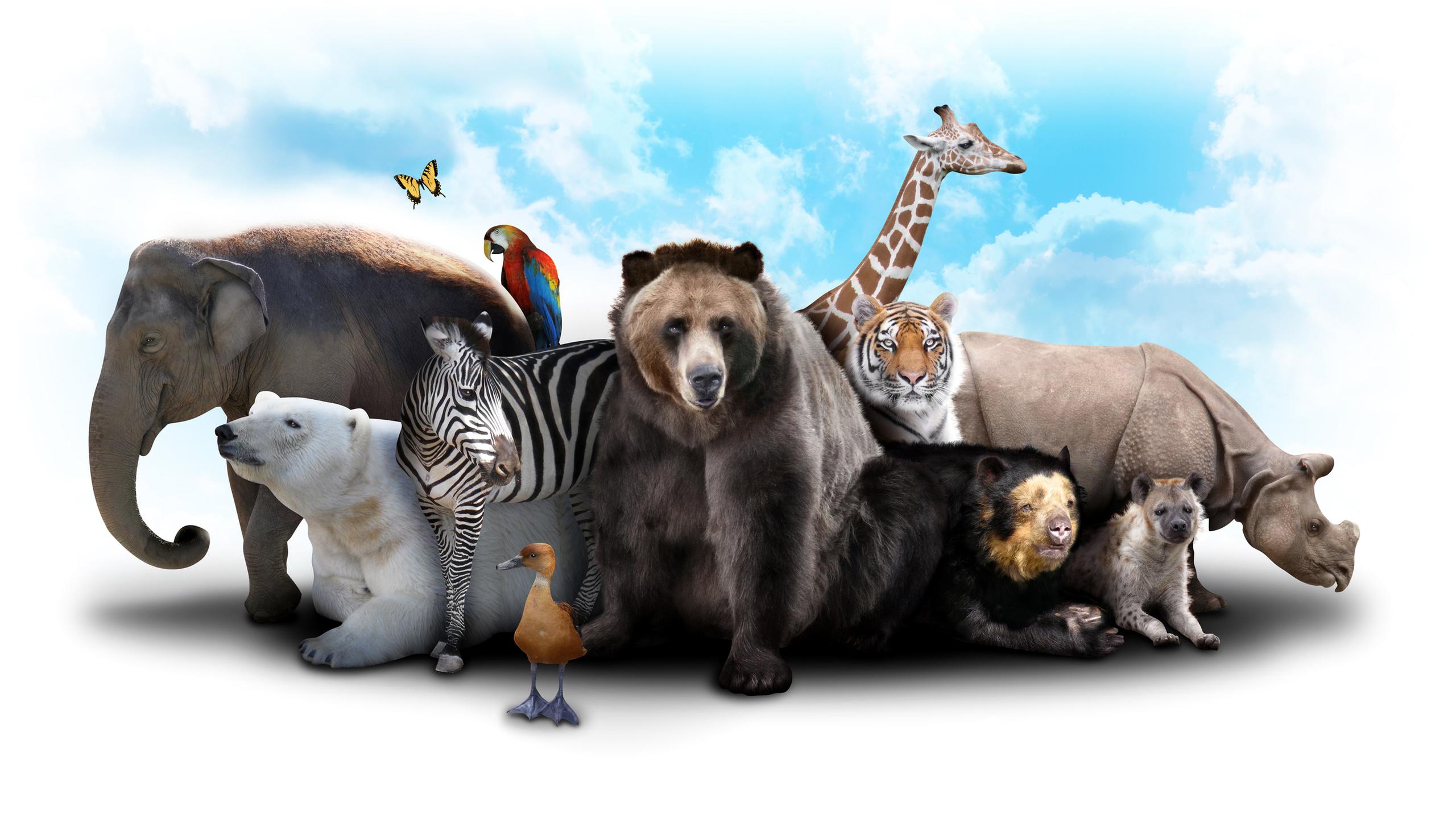 Животный мир картинки вектор, картинки картинки юбилей
