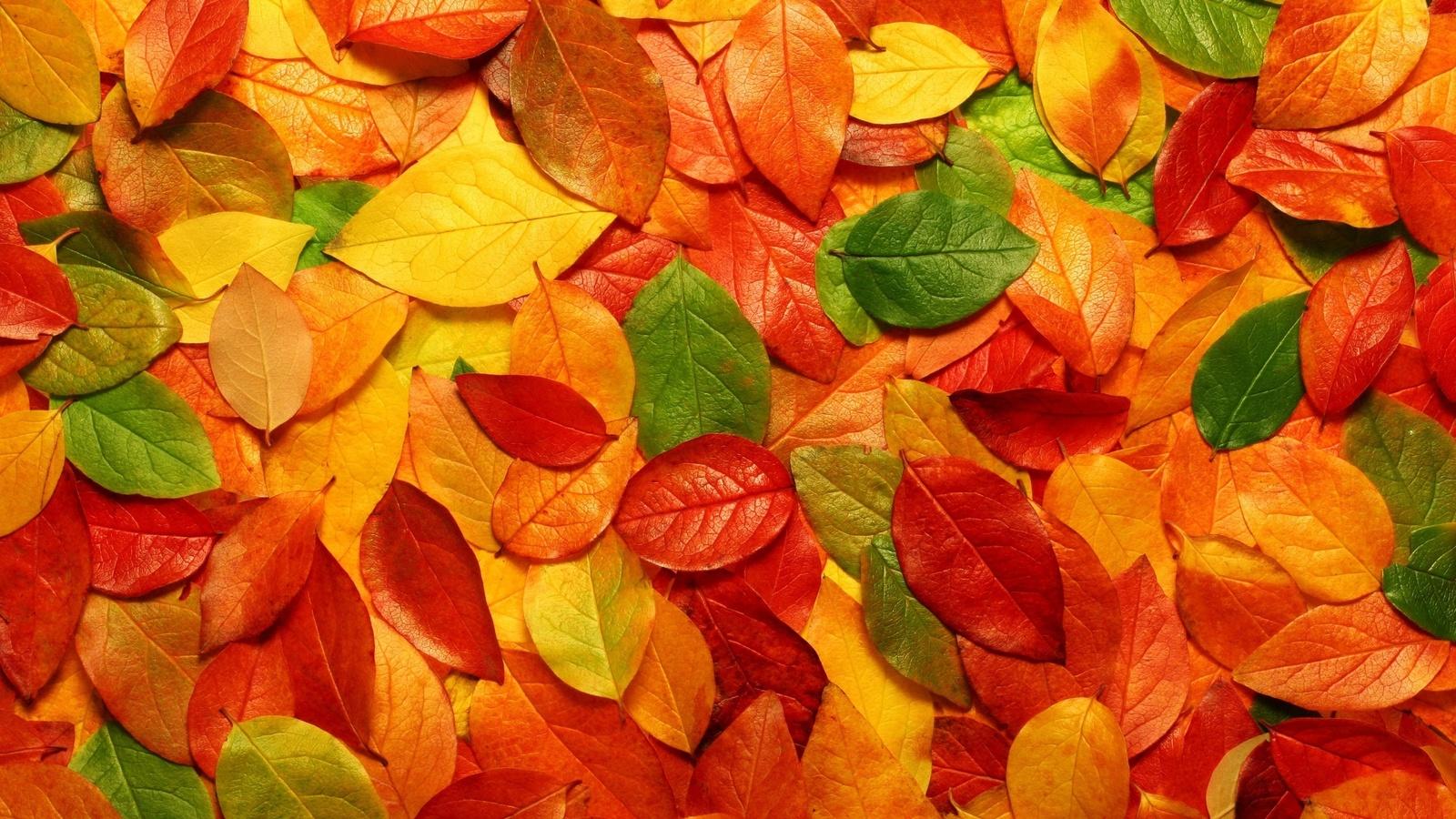 Картинках, картинки с листьев
