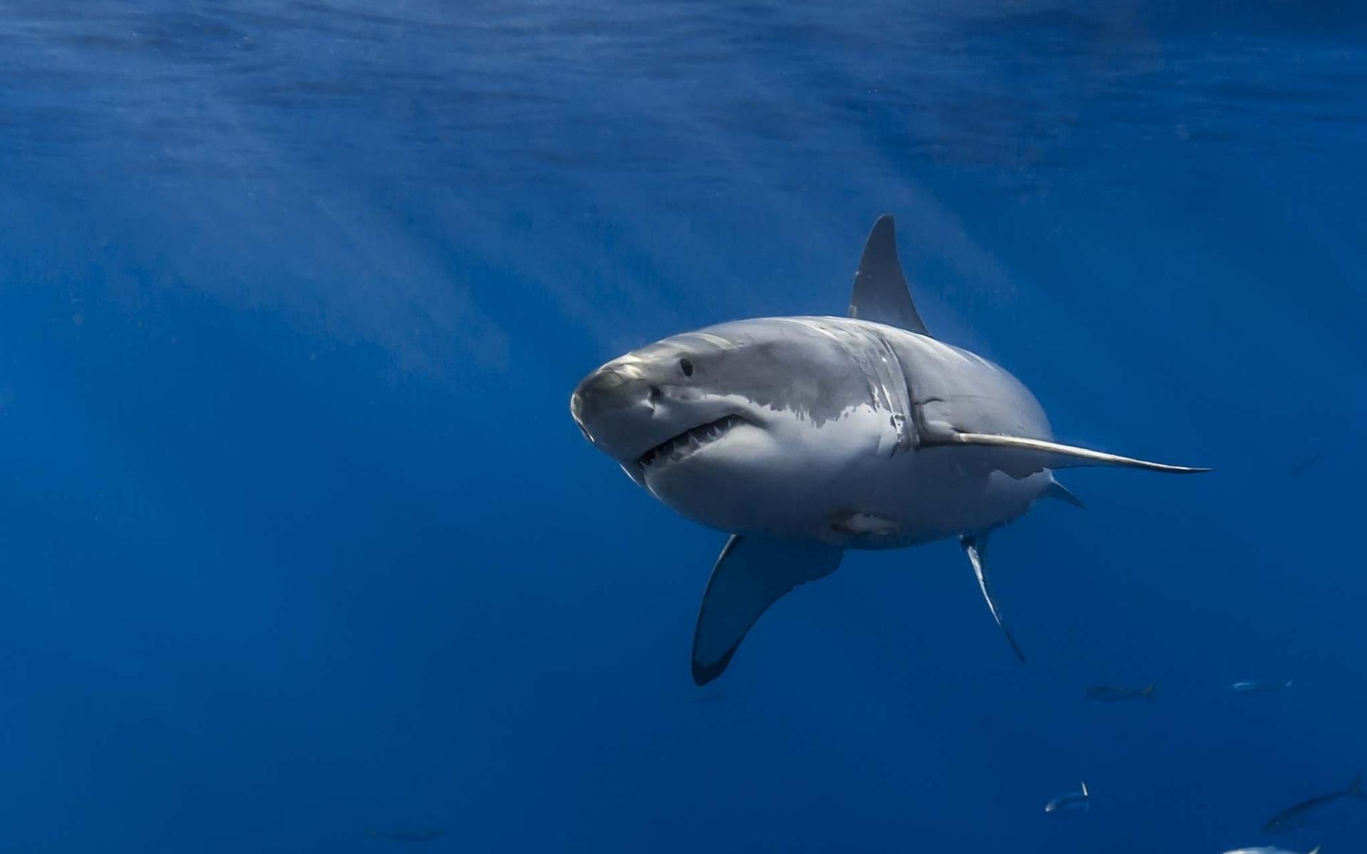 картинка акула бесите здесь насчитывается