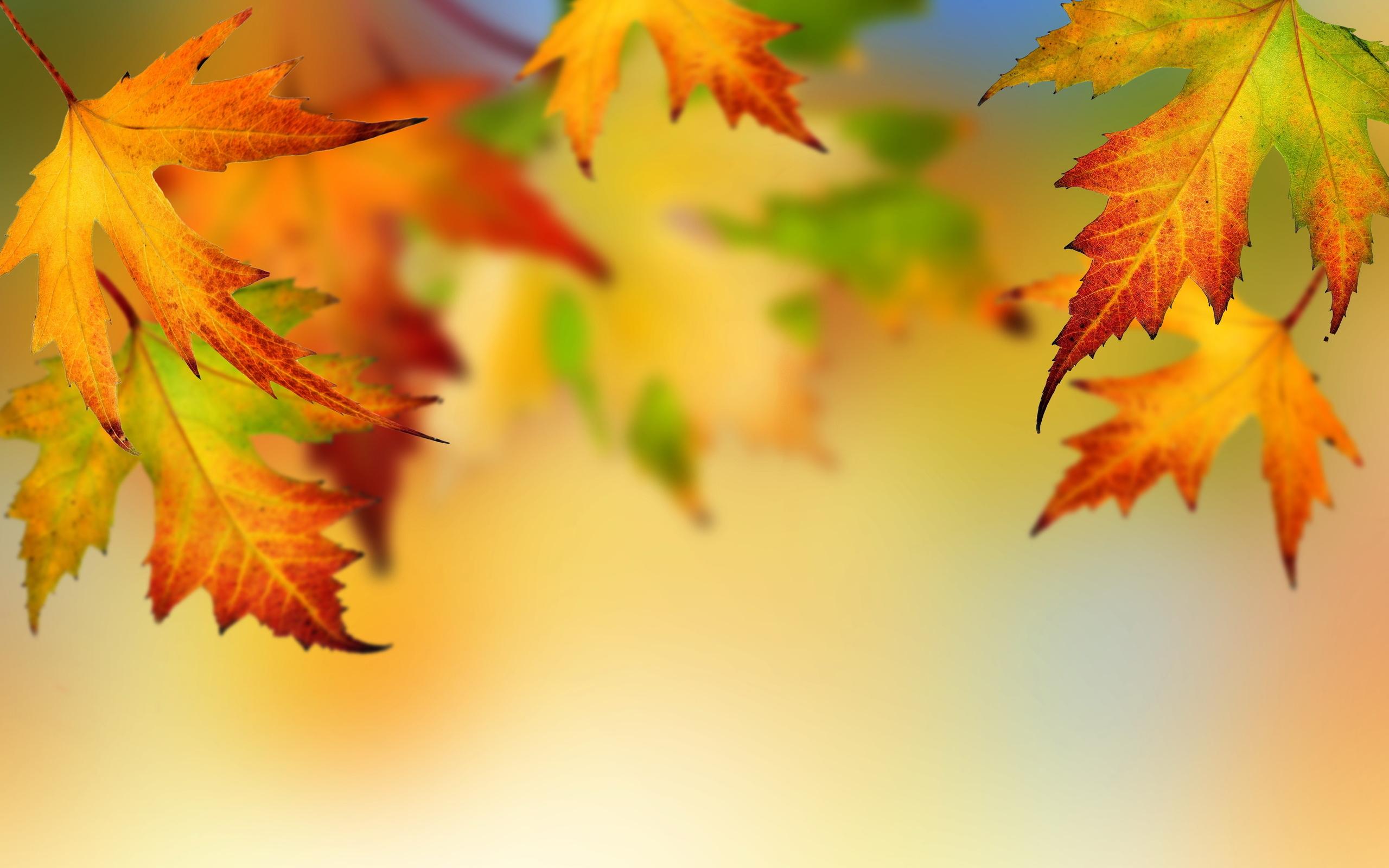 Пенсионеры, открытки осенние листья
