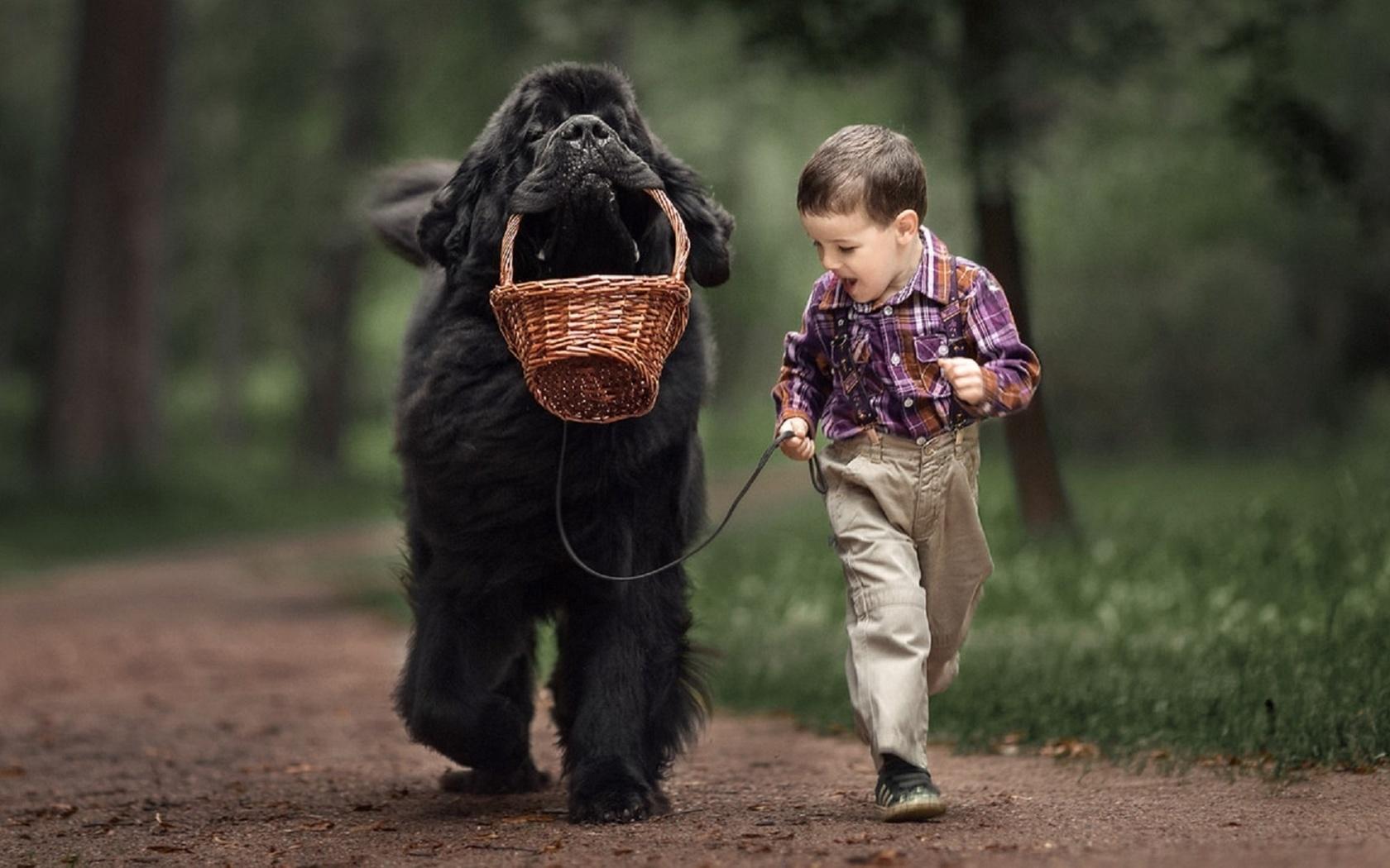 Собаки фото красивые и смешные с детьми, открытка своими