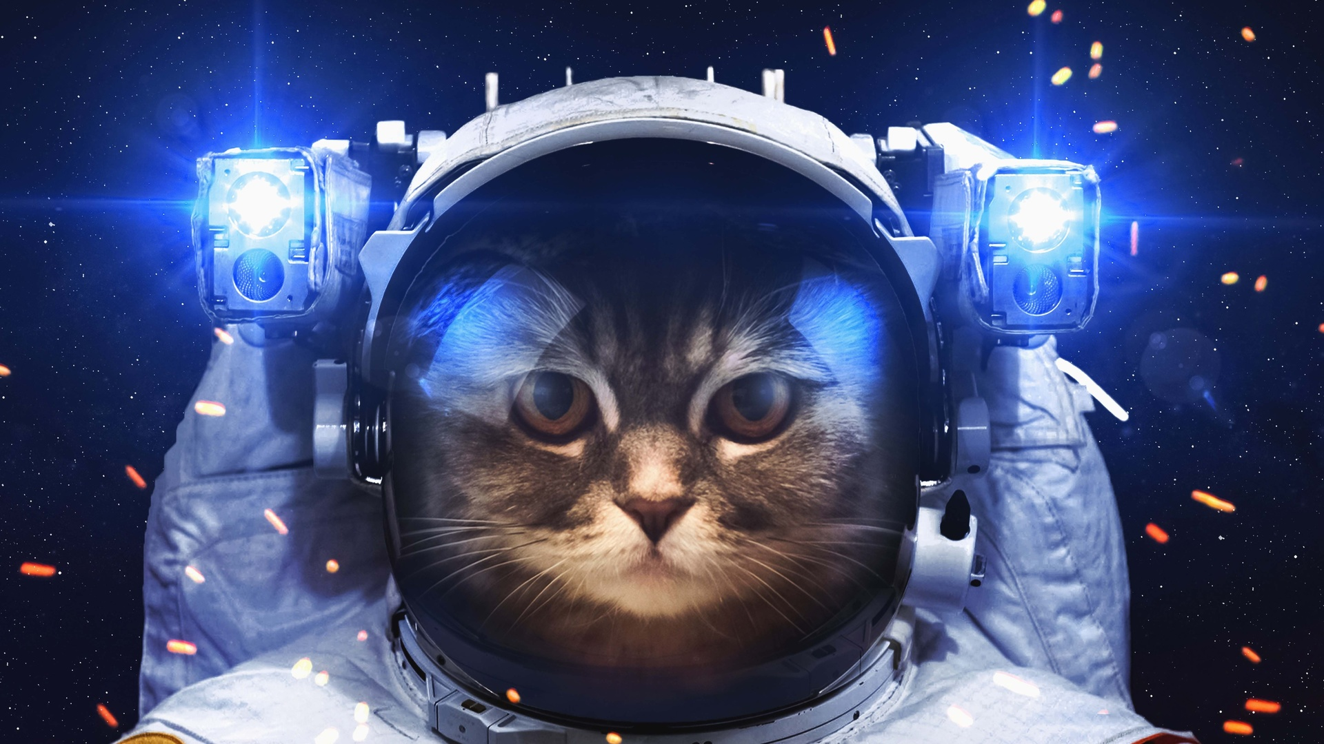 кот, космонавт, фэнтези, работа