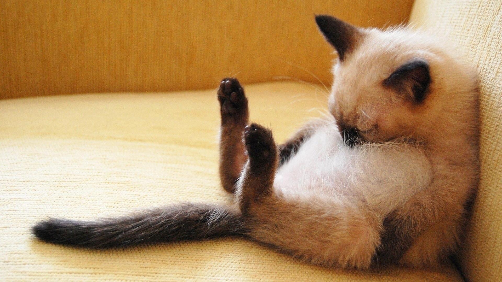 Смешные картинки спать