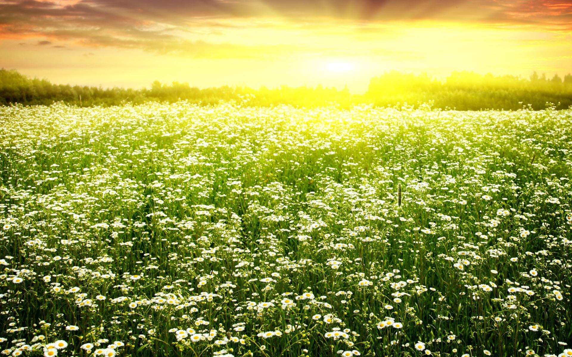 Картинки поле с цветами и солнце