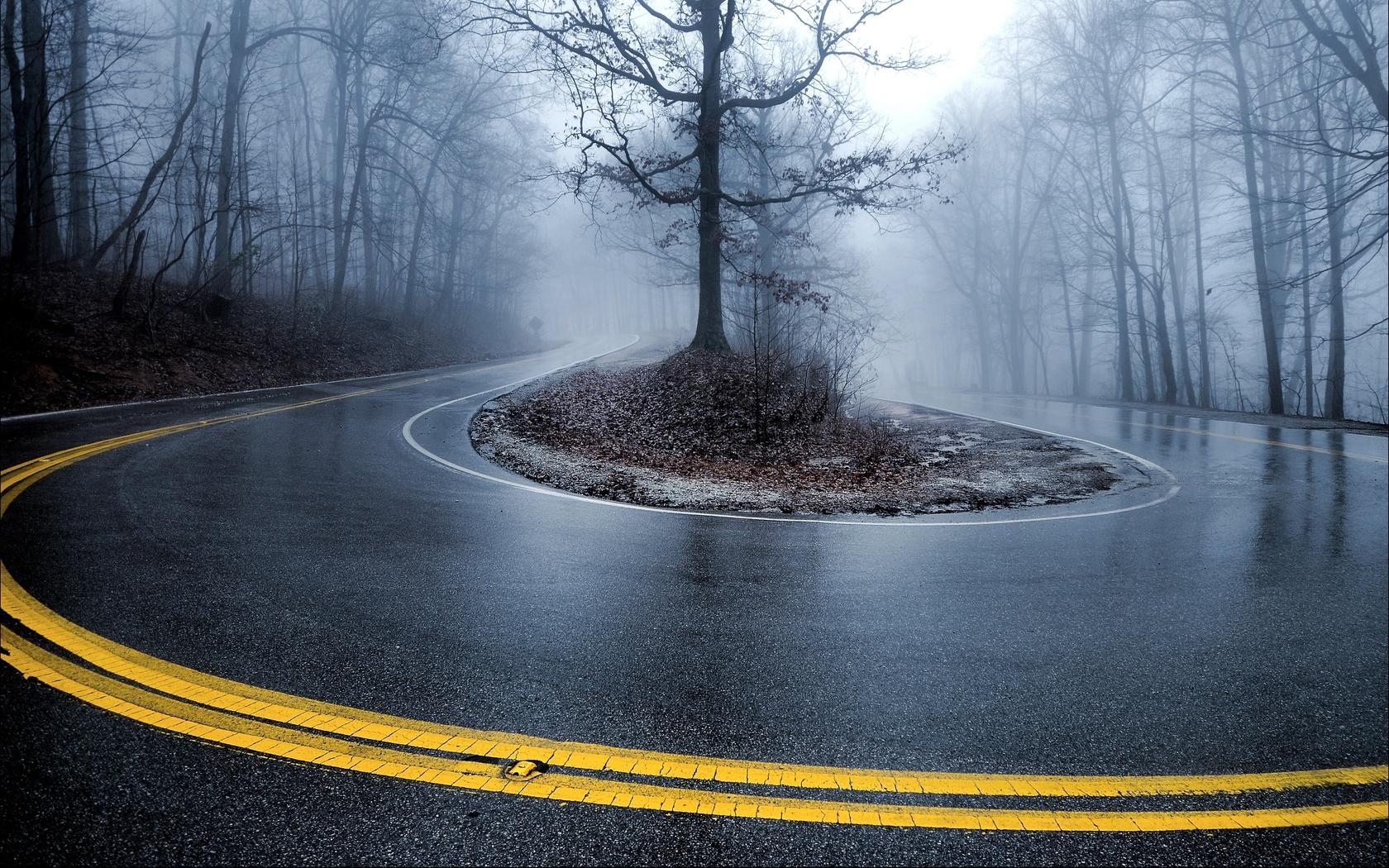 дорога, деревья, поворот, туман