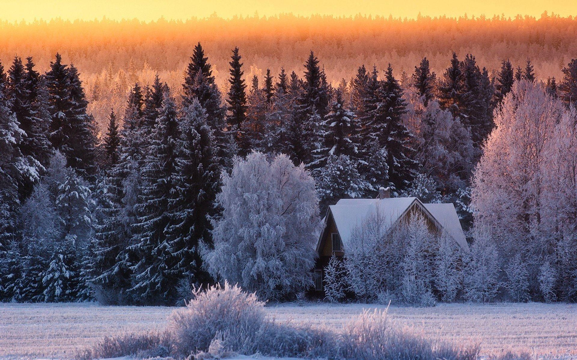Выходные, красивый зимний пейзаж картинки в лесу