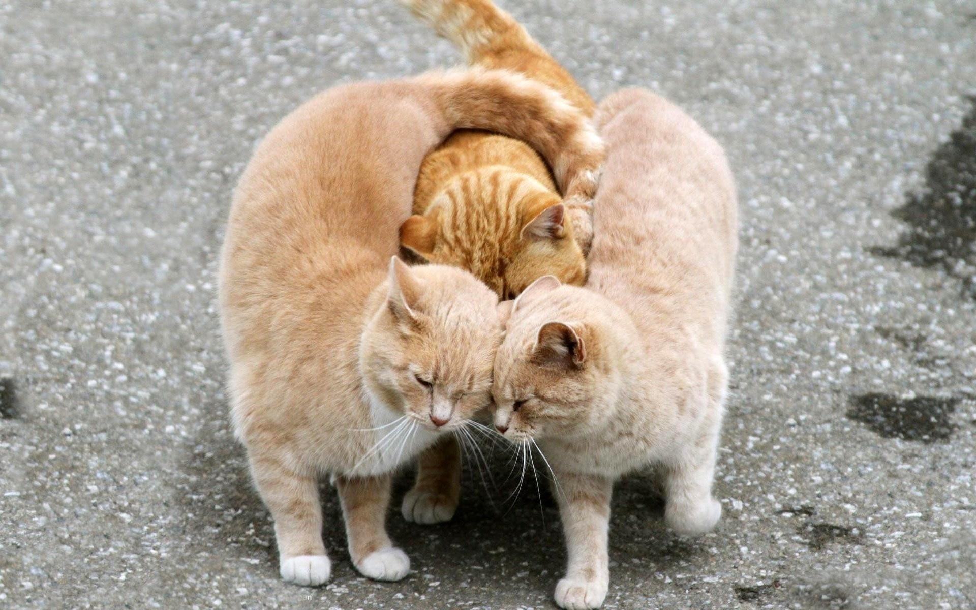 Картинка коты смешные любовь, картинки