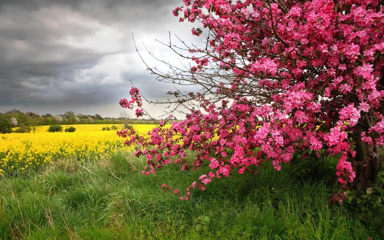 желтые, цветы, розовые, цветы, цветы, весна, деревья, природа, пейзаж