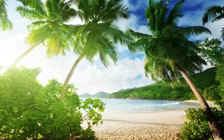 Открытки стихами, открытка с морем и пальмой