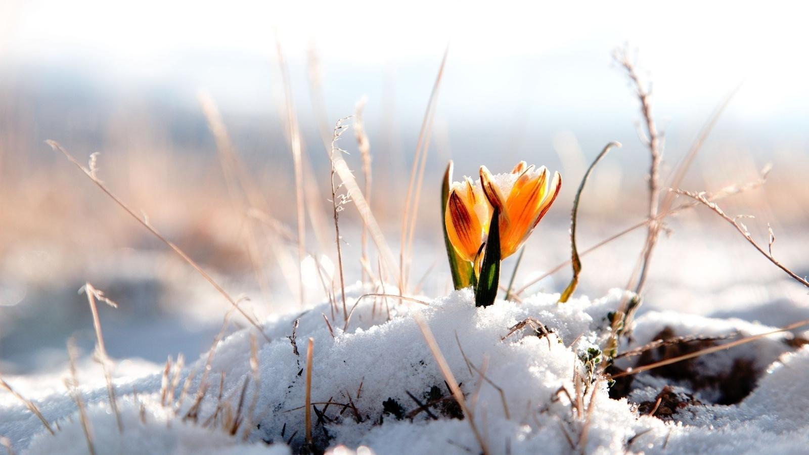 Картинки грибниках, картинки снежное утро весной
