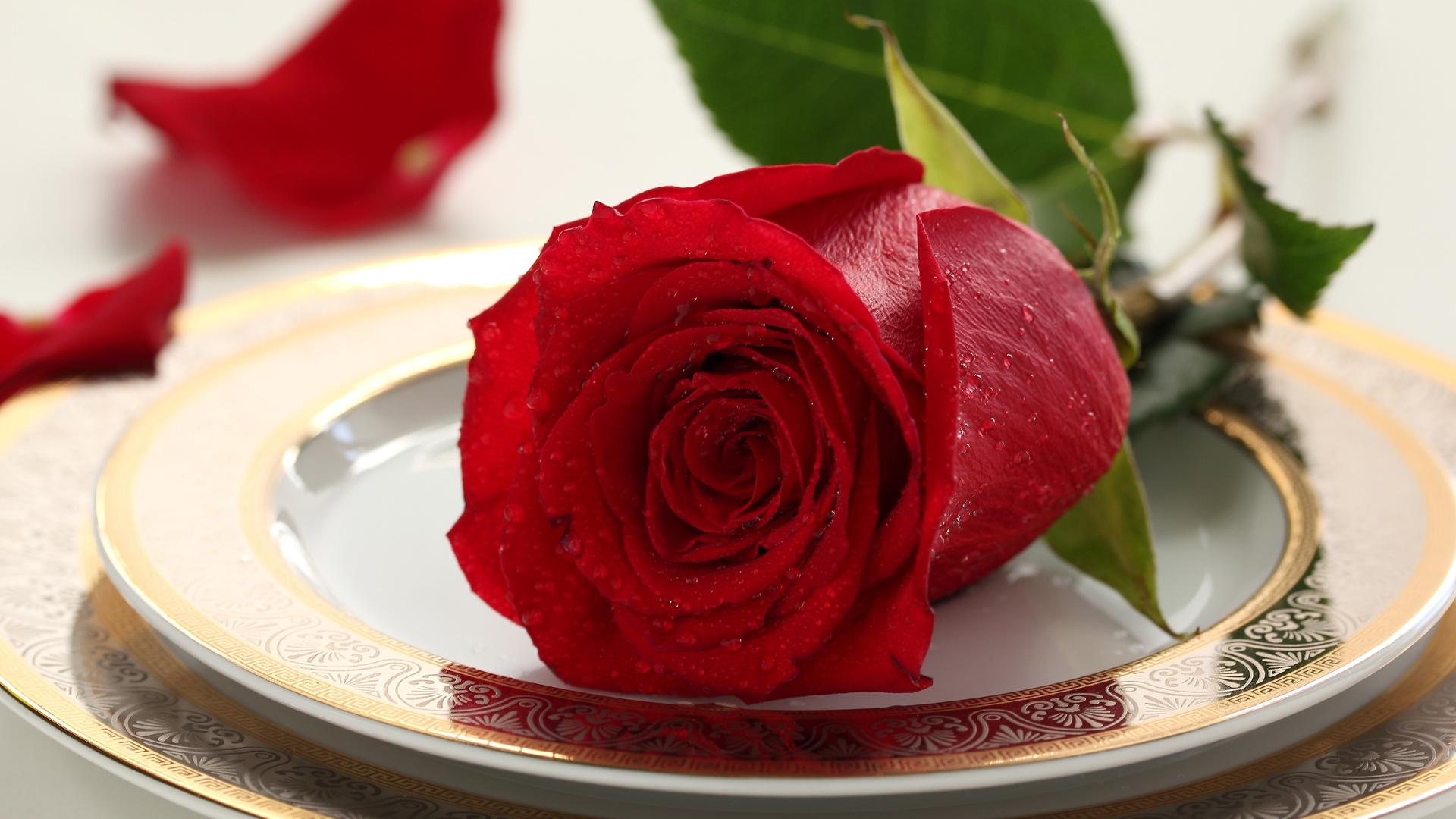 rose, капли, цветок, роза, стол, drops, сервис, service
