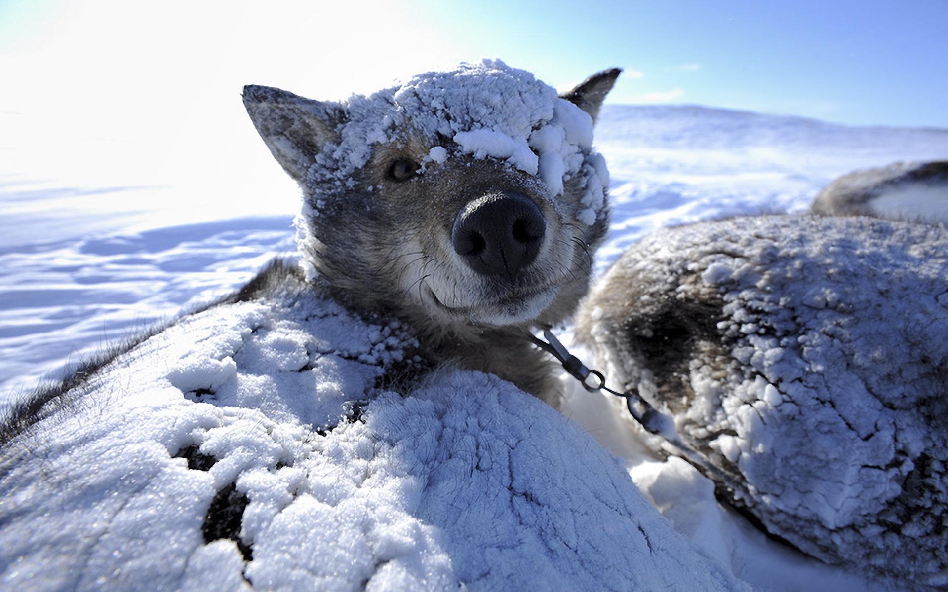 Декретный отпуск, прикольные картинки морозный день