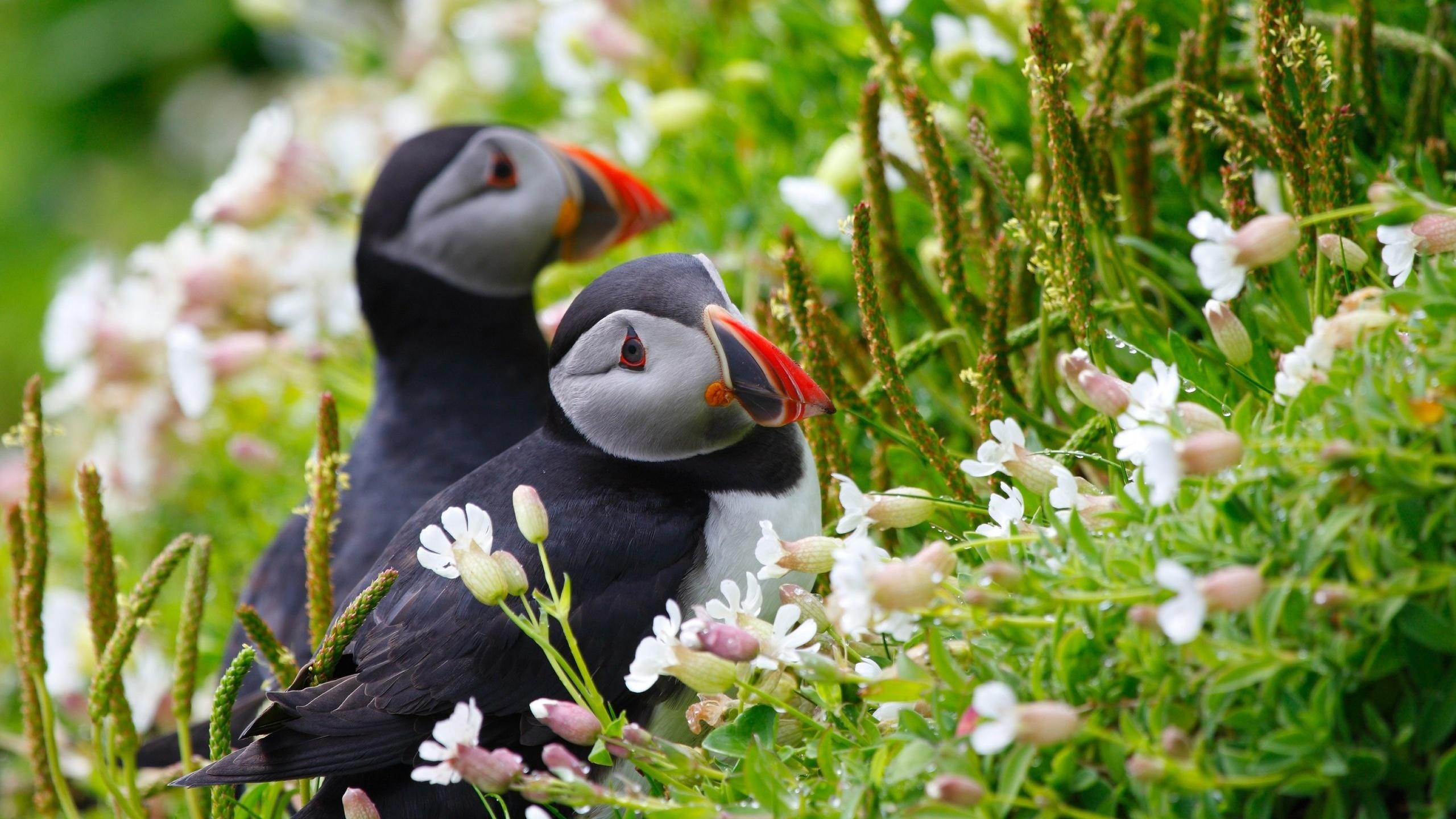 Артикуляционная, картинки природы животных и птиц