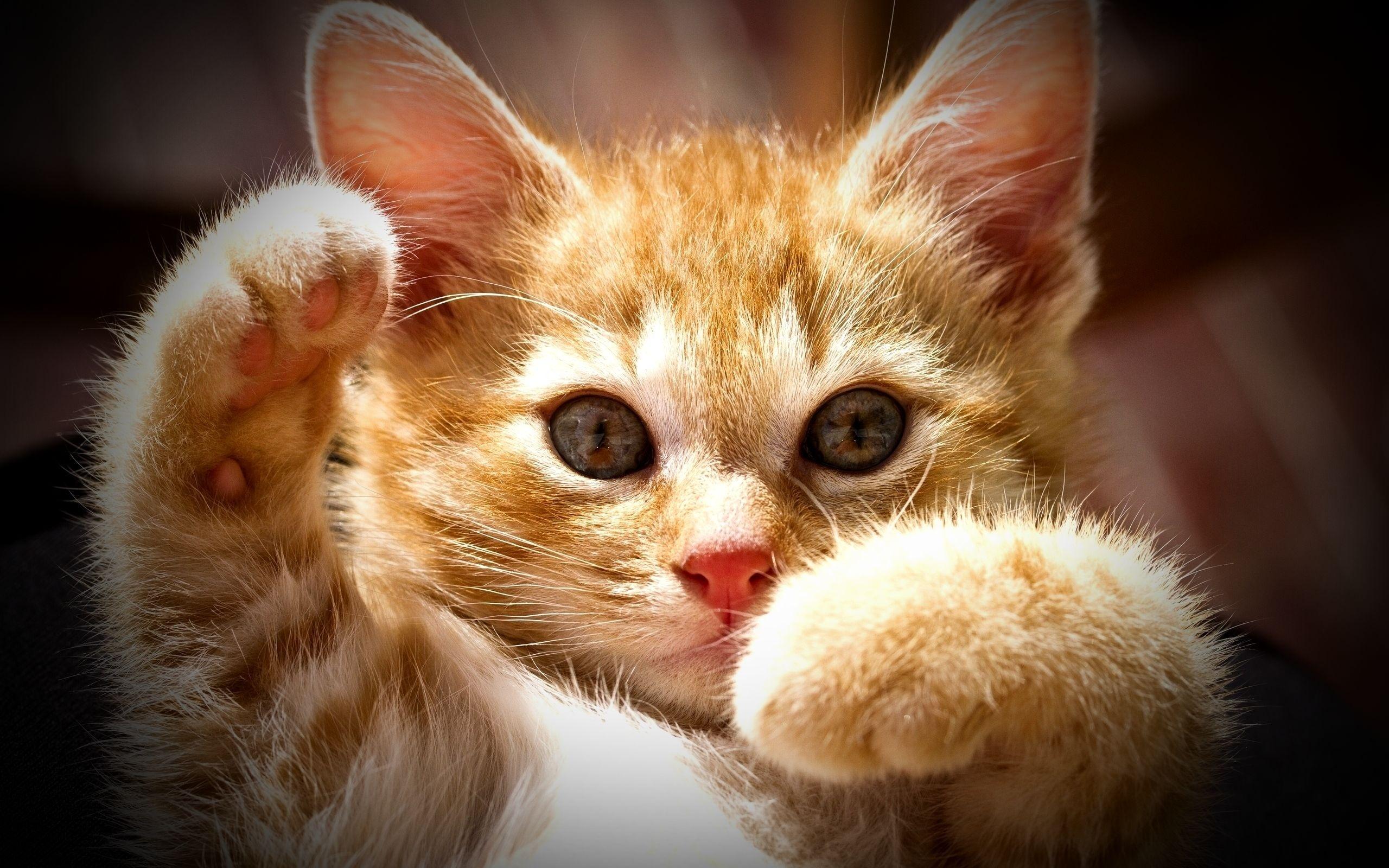 Прикольная картинка с котенком, картинка сестер любовь