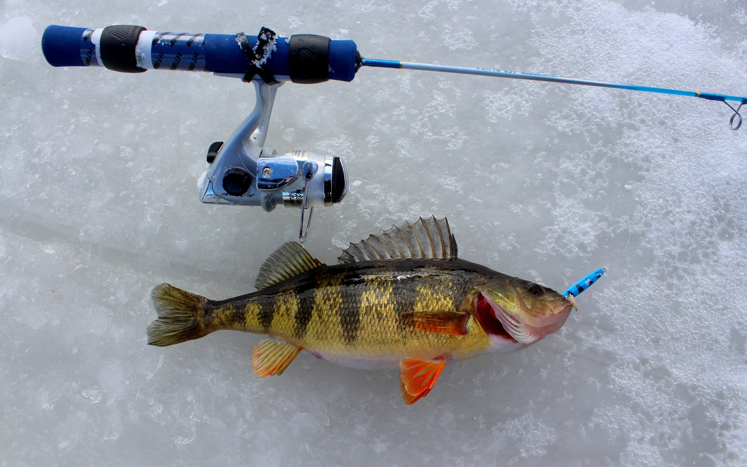 зимой рыбалка со льда снасти фото добрых
