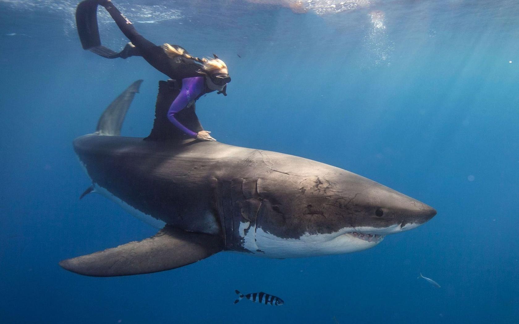 какие акулы водятся в средиземном море фото историю российской мировой