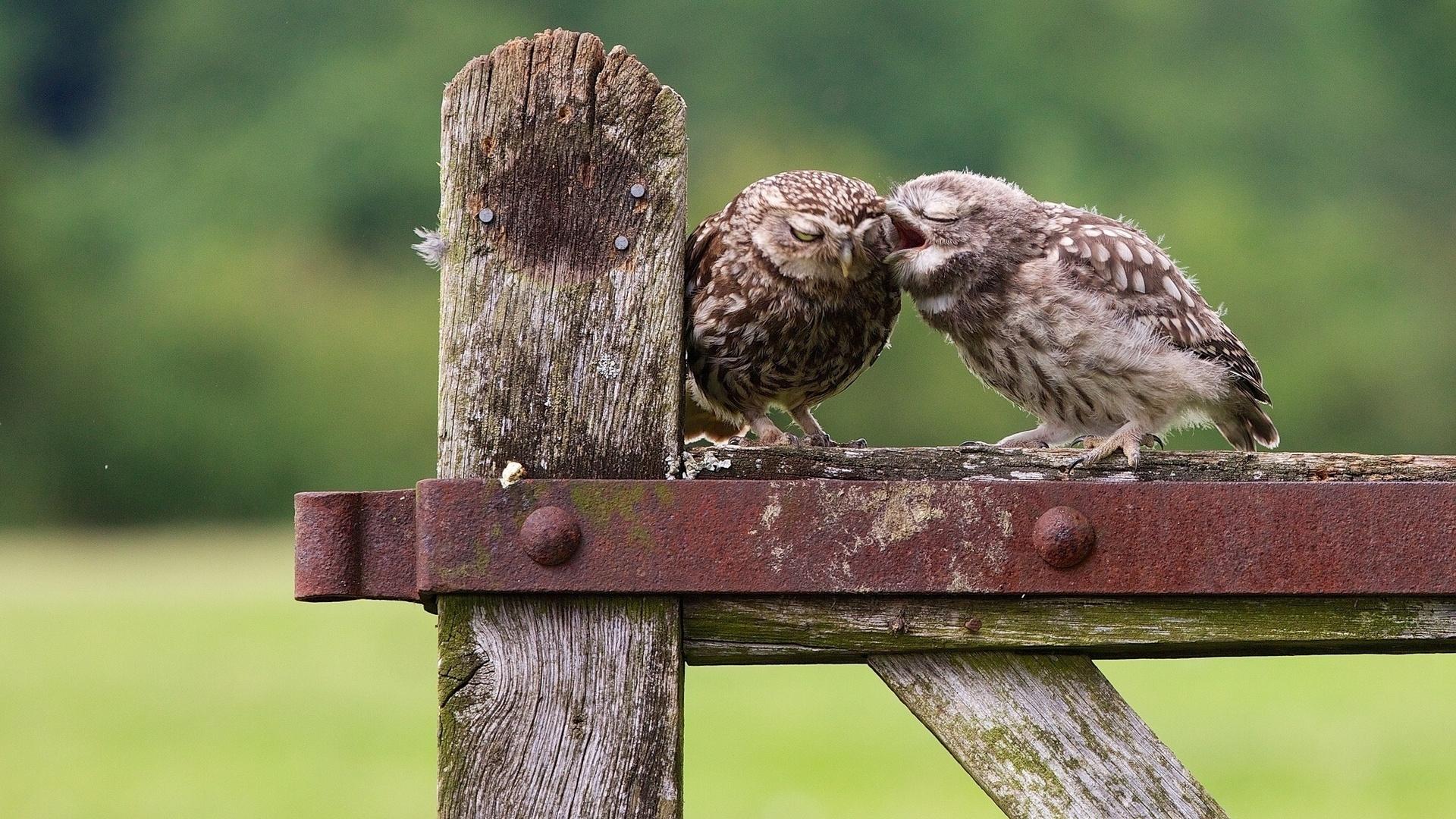 Картинка с спокойной ночи с птенцами, псд днем