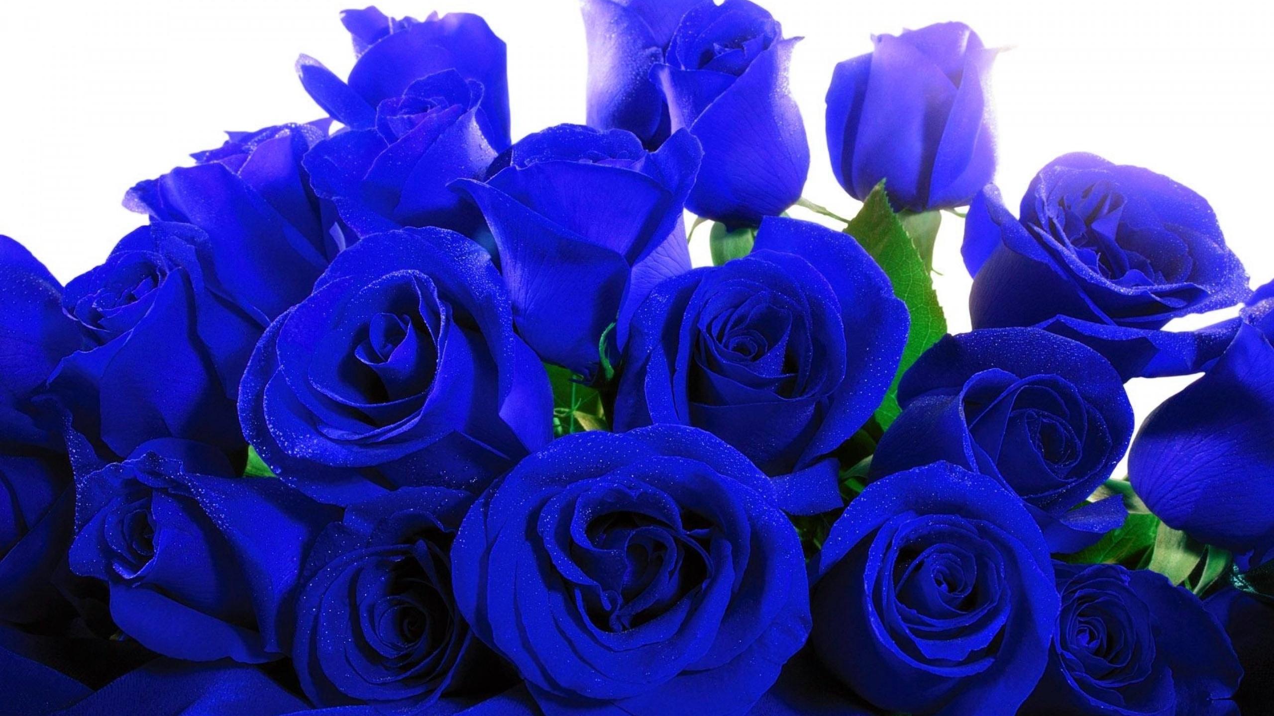 Детский, купить синие розы цветы фото
