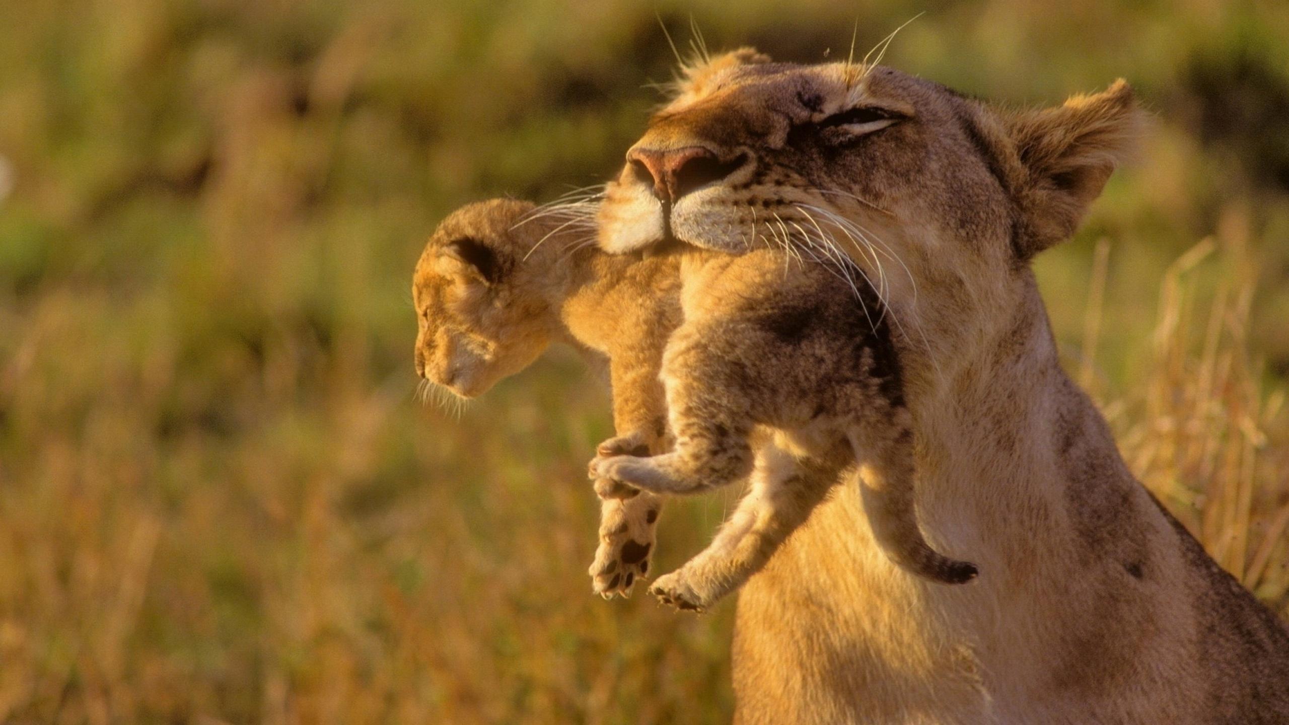 Листьями, картинки про львенка смешные