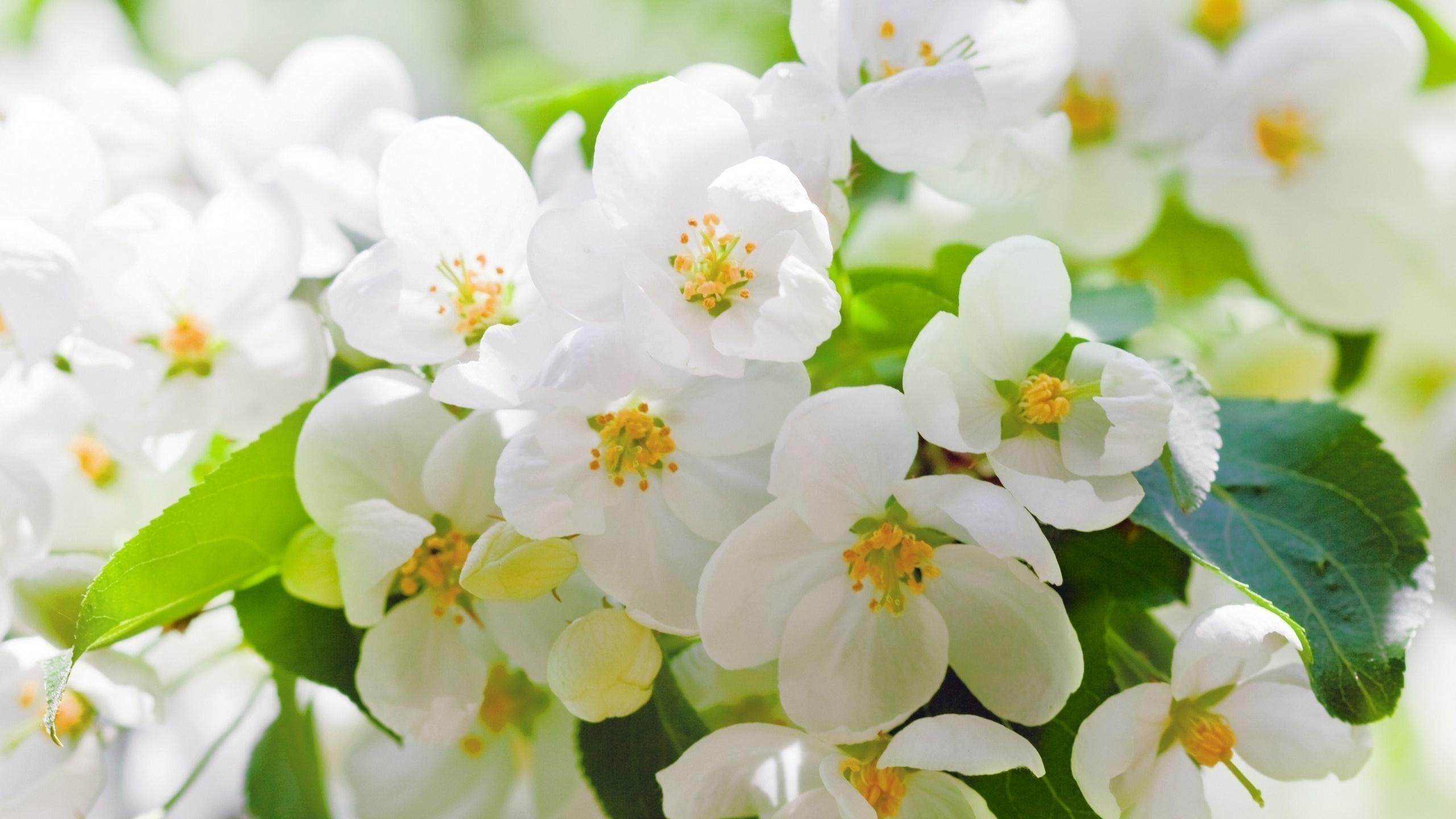 Приколы, открытки с цветущей яблоней весной