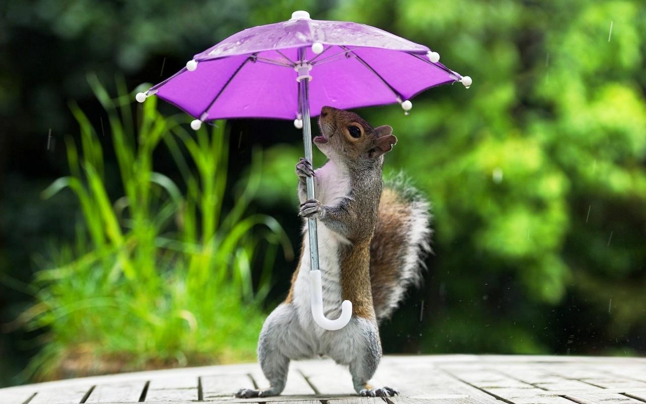 Барс картинки, дождь смешная картинка