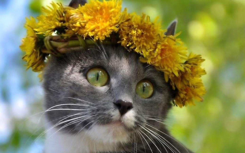 Цветов, уже весна картинки