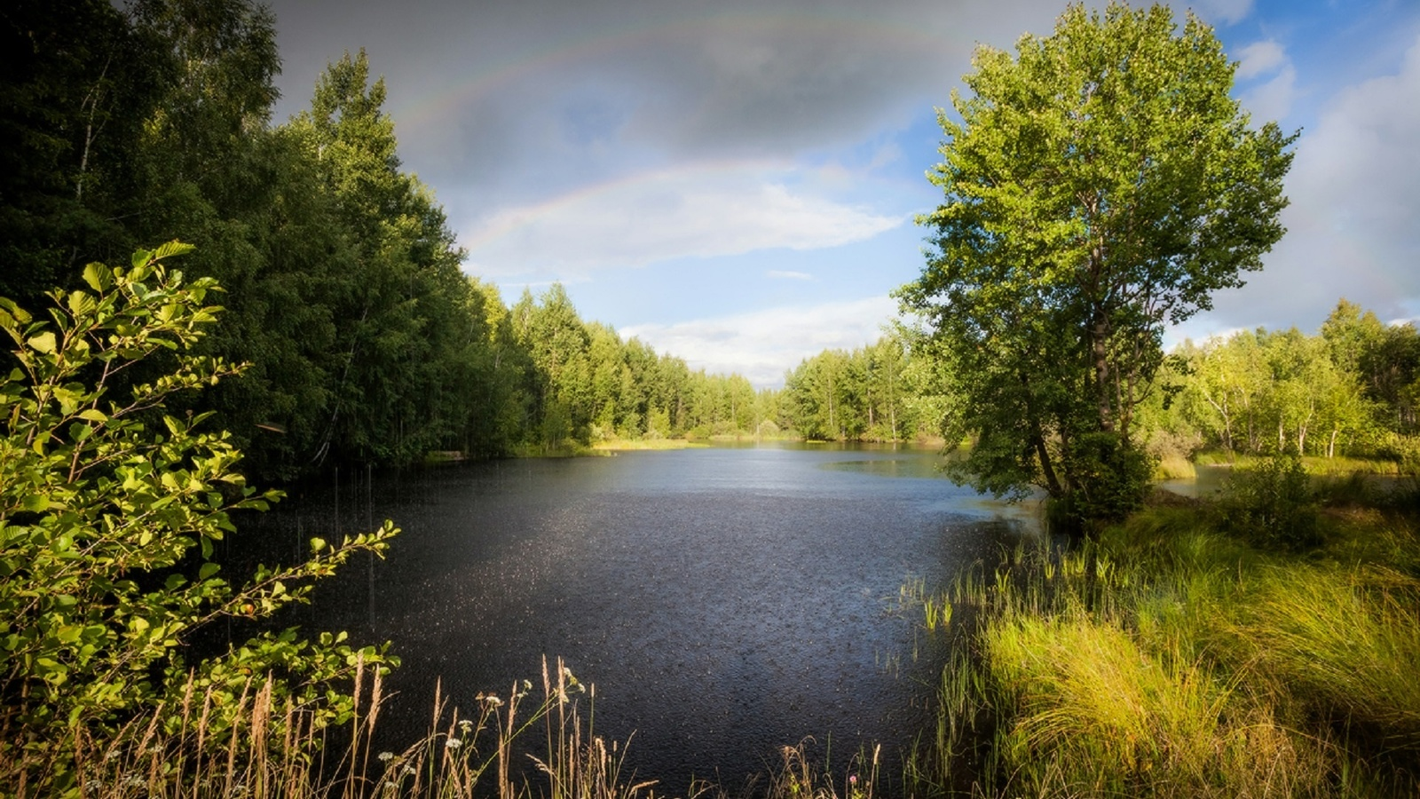 озеро, лес, радуга, ливень, вечер, благодать, копычко михаил, деревья,крона,кустарник,листва,зелень,облака,облака