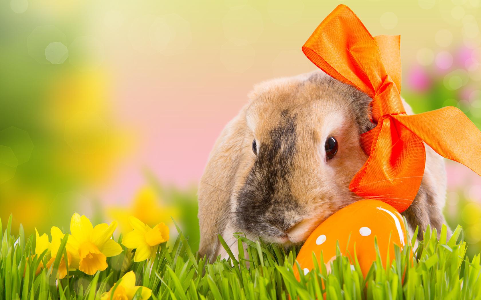Кролики пасхальные картинки, готовые