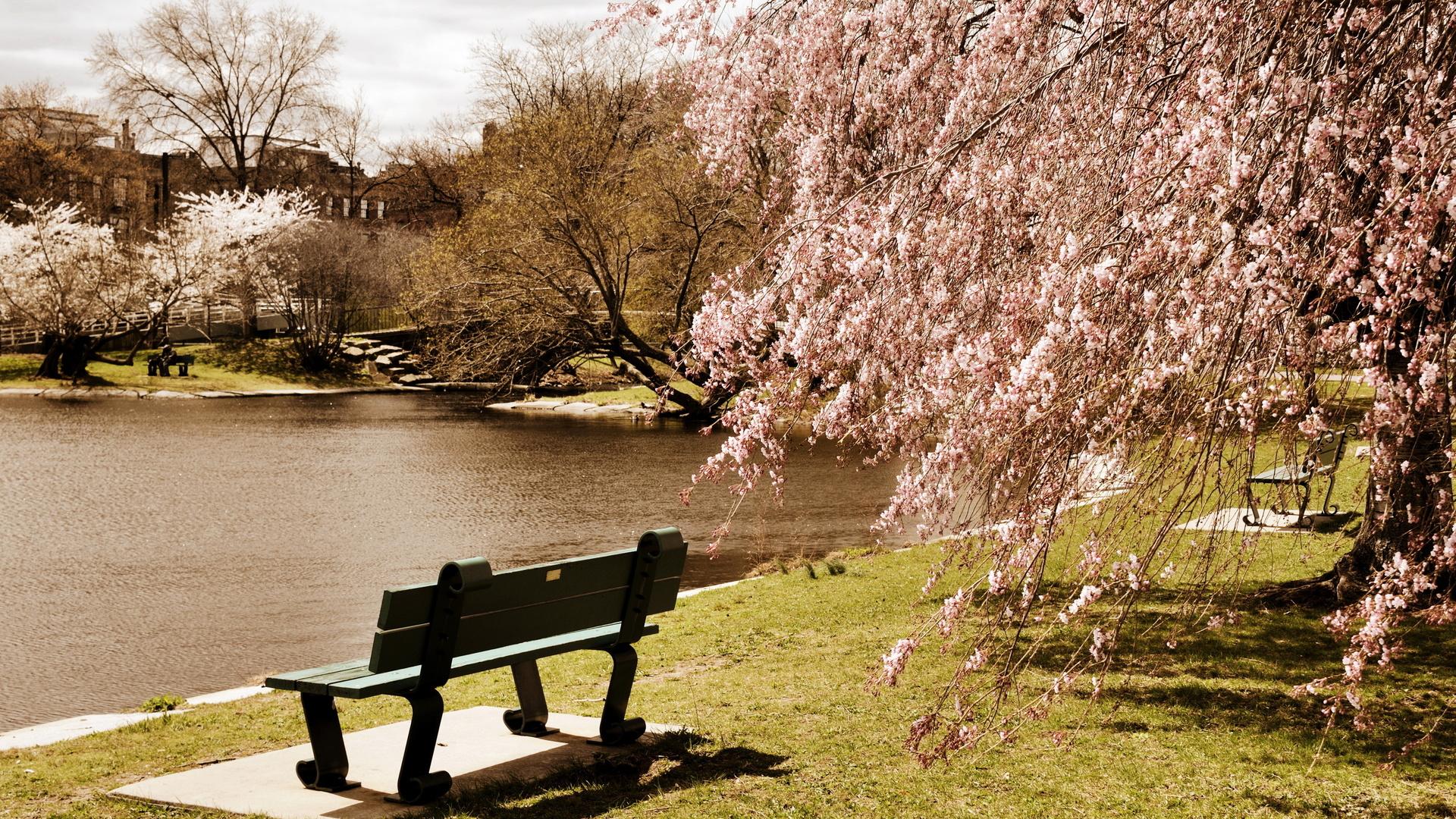парк, деревья, boston, пруд, massachusetts, скамейка, сша