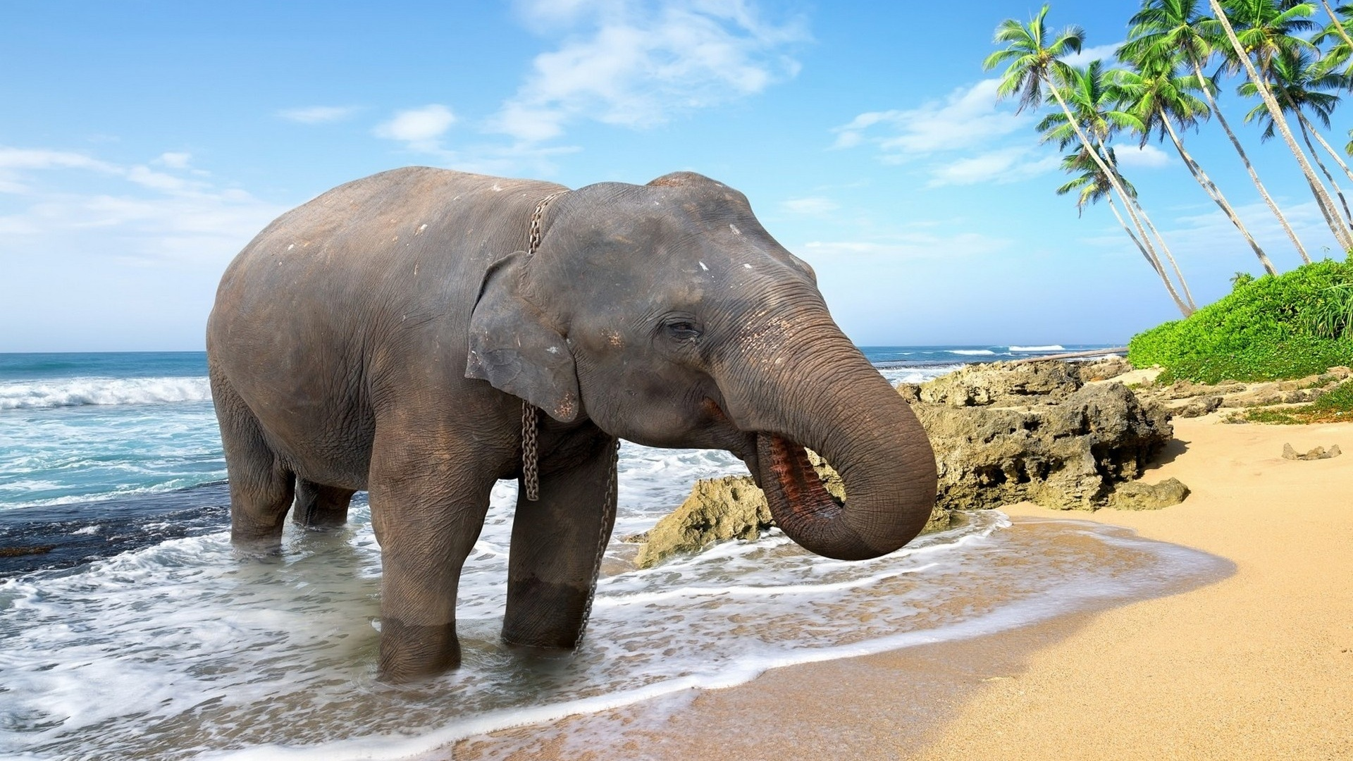 Слоники картинки красивые, открытки ураза