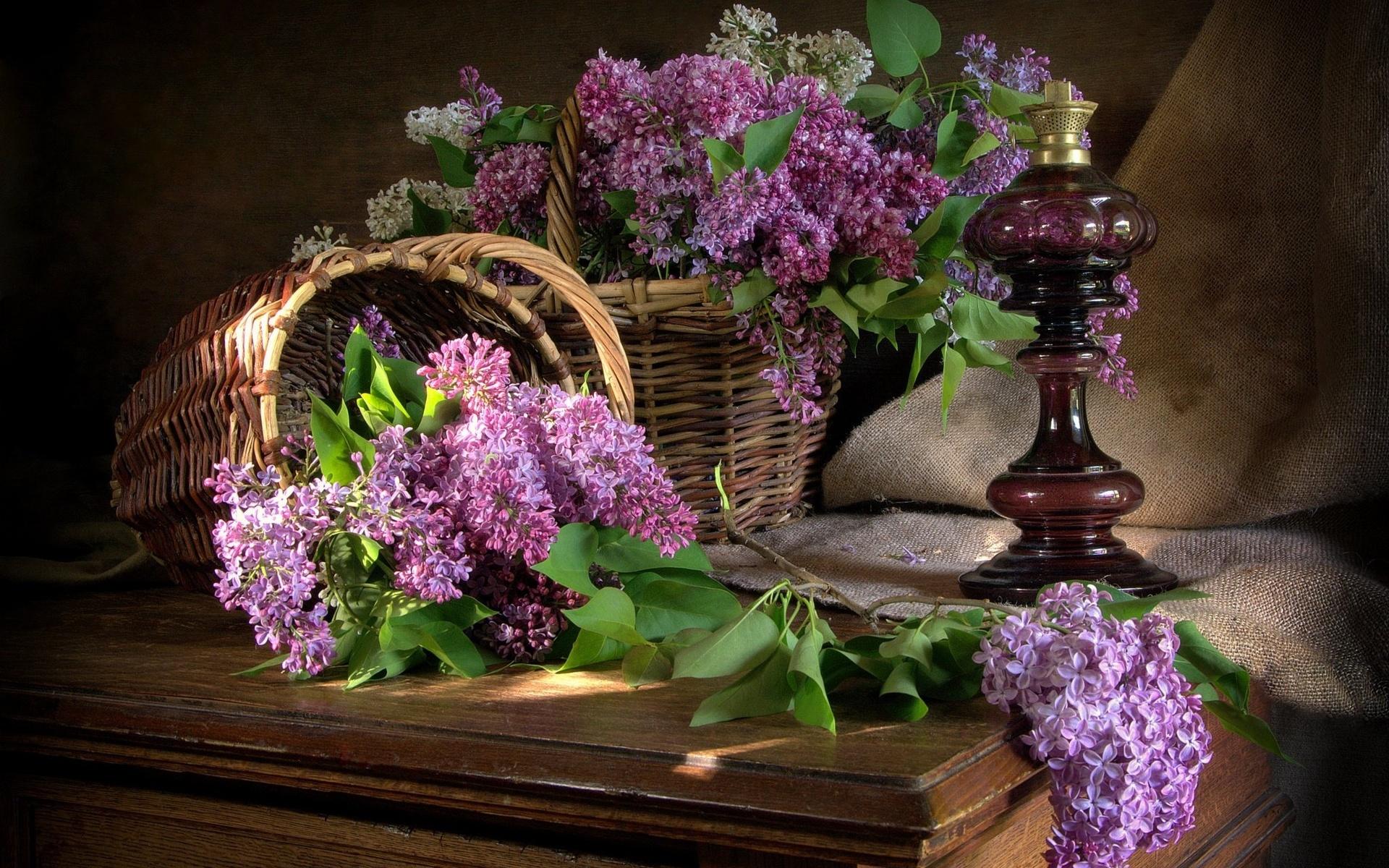 Цветы картинки добрый вечер, картинки